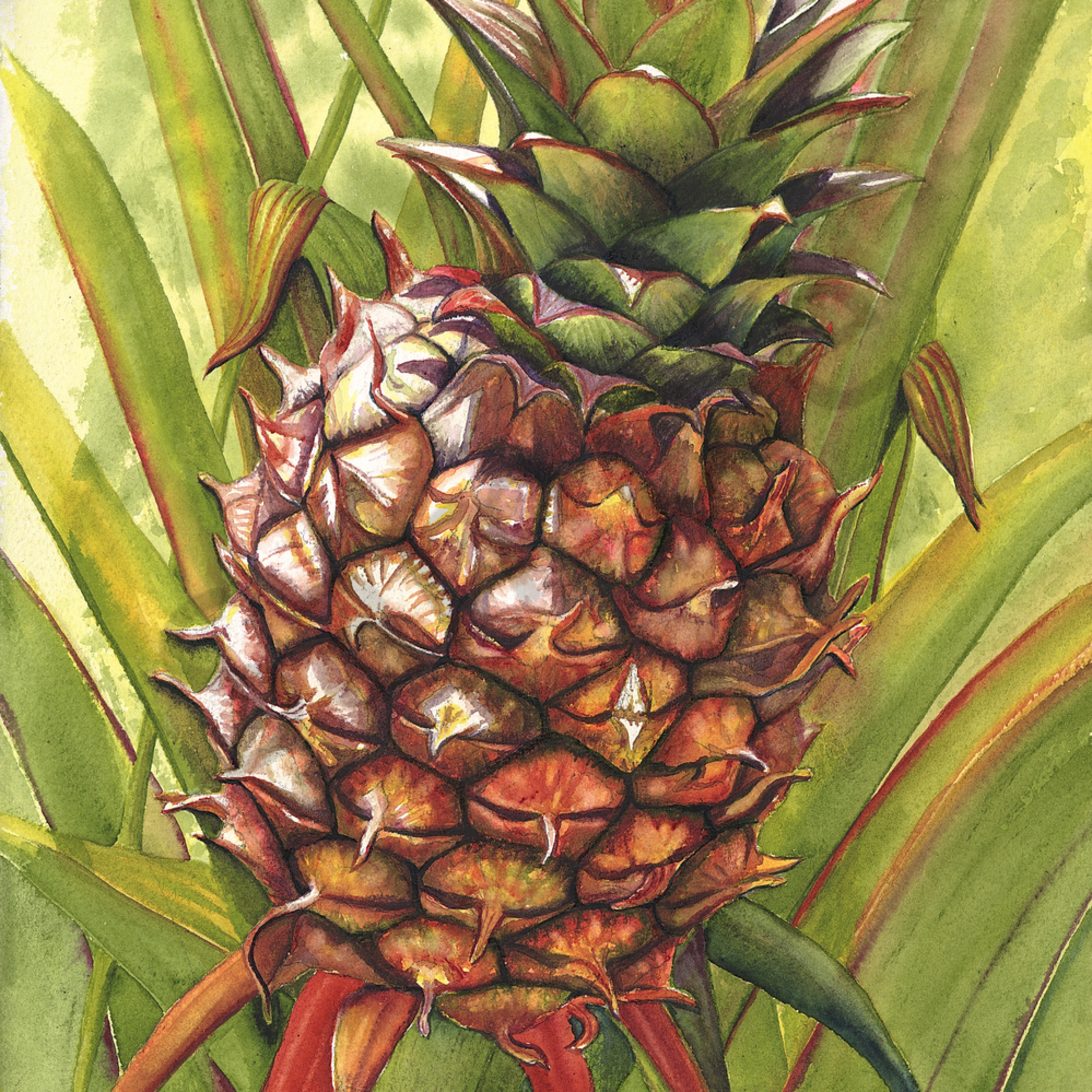 1 pineapple nbjrau