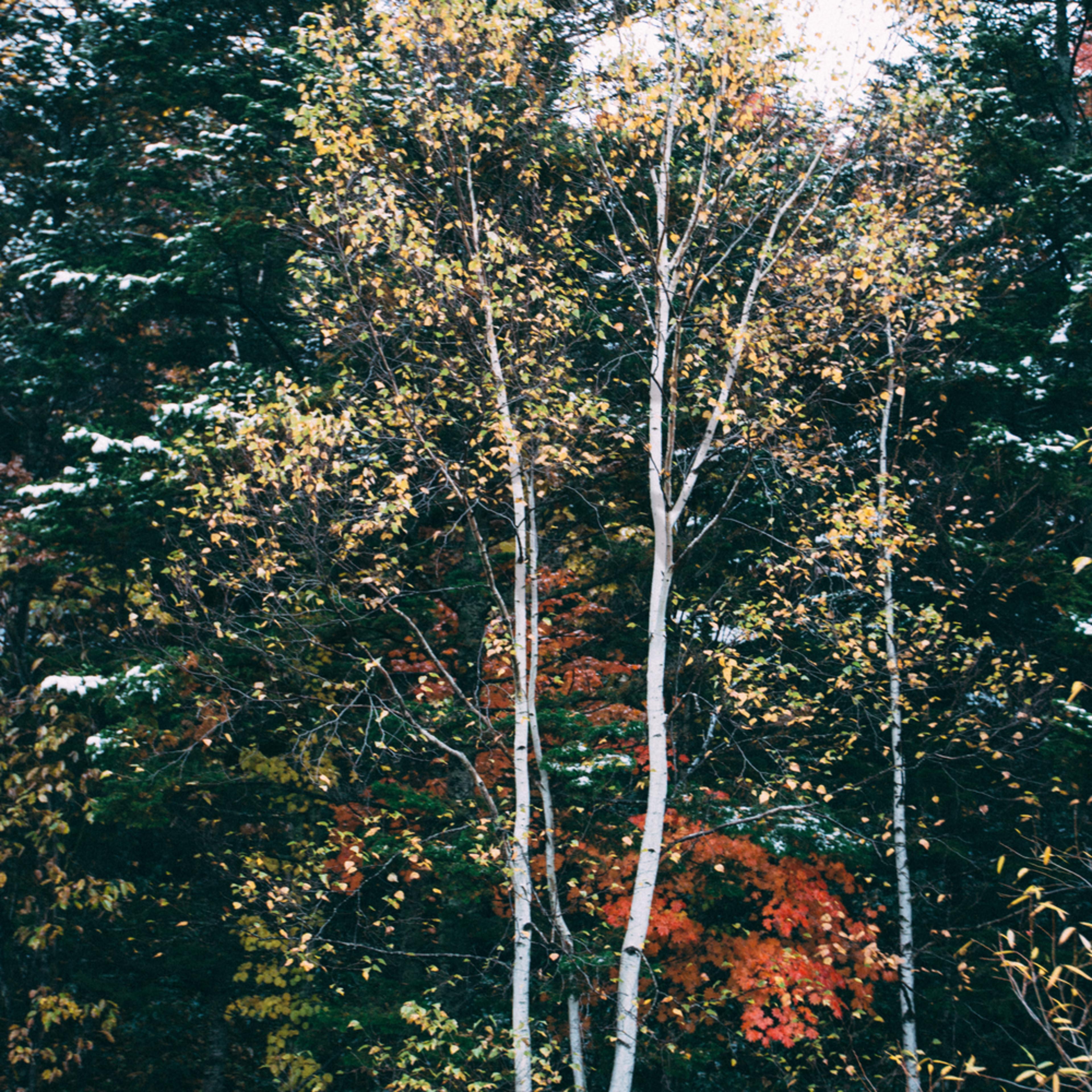 Tree and snow 3 kmv1i5