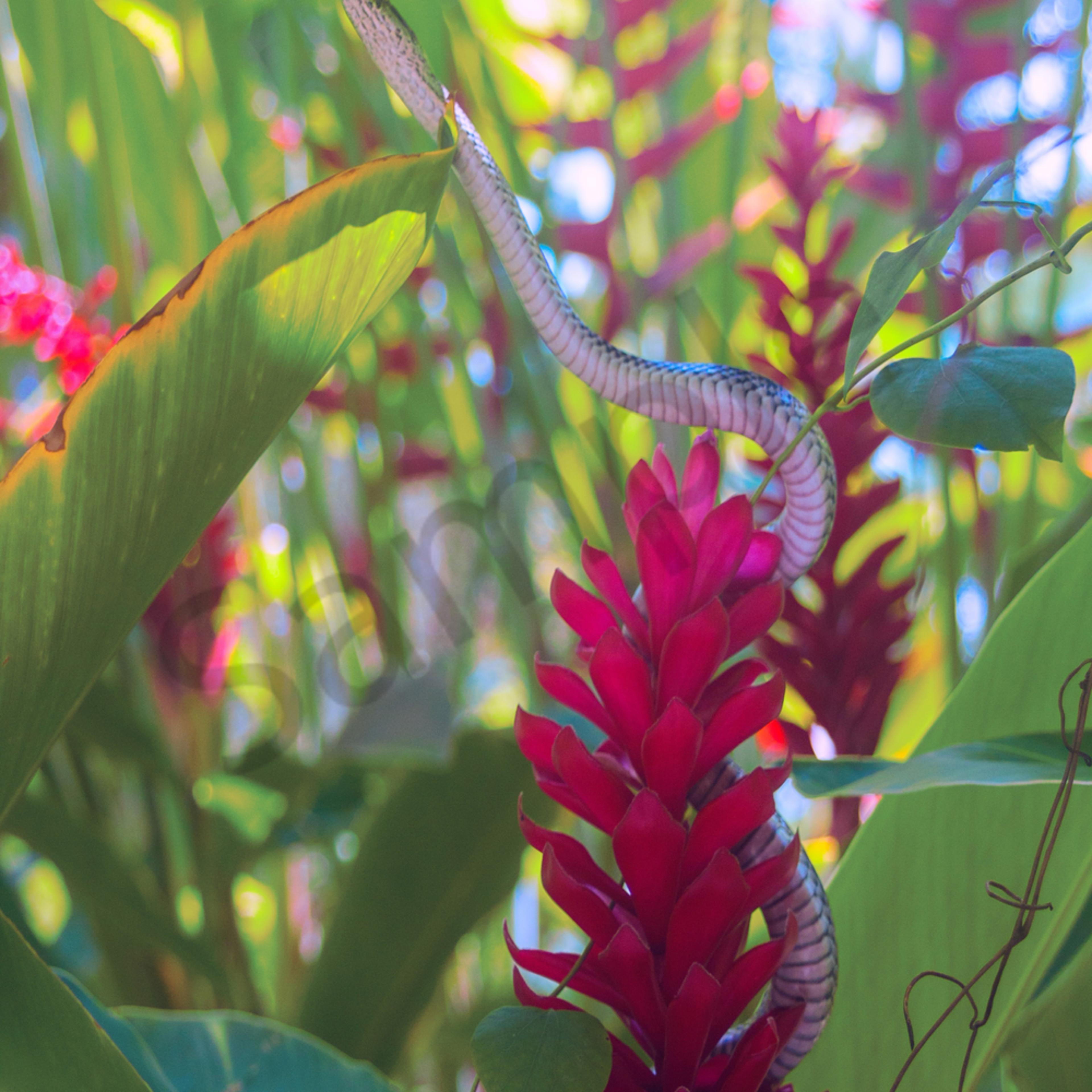 Snake in the flowers website qfsmrx