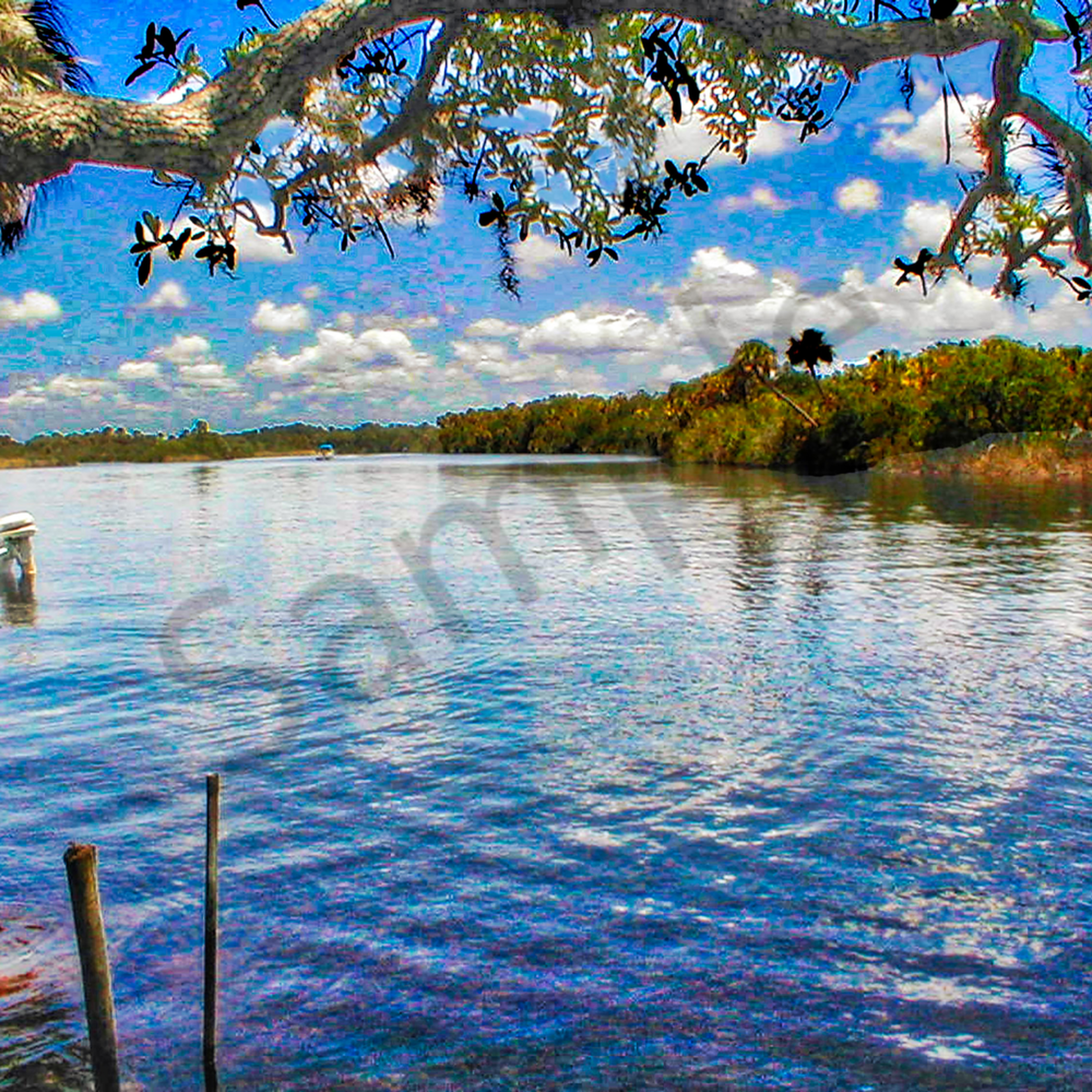 Myakka river zlajgx