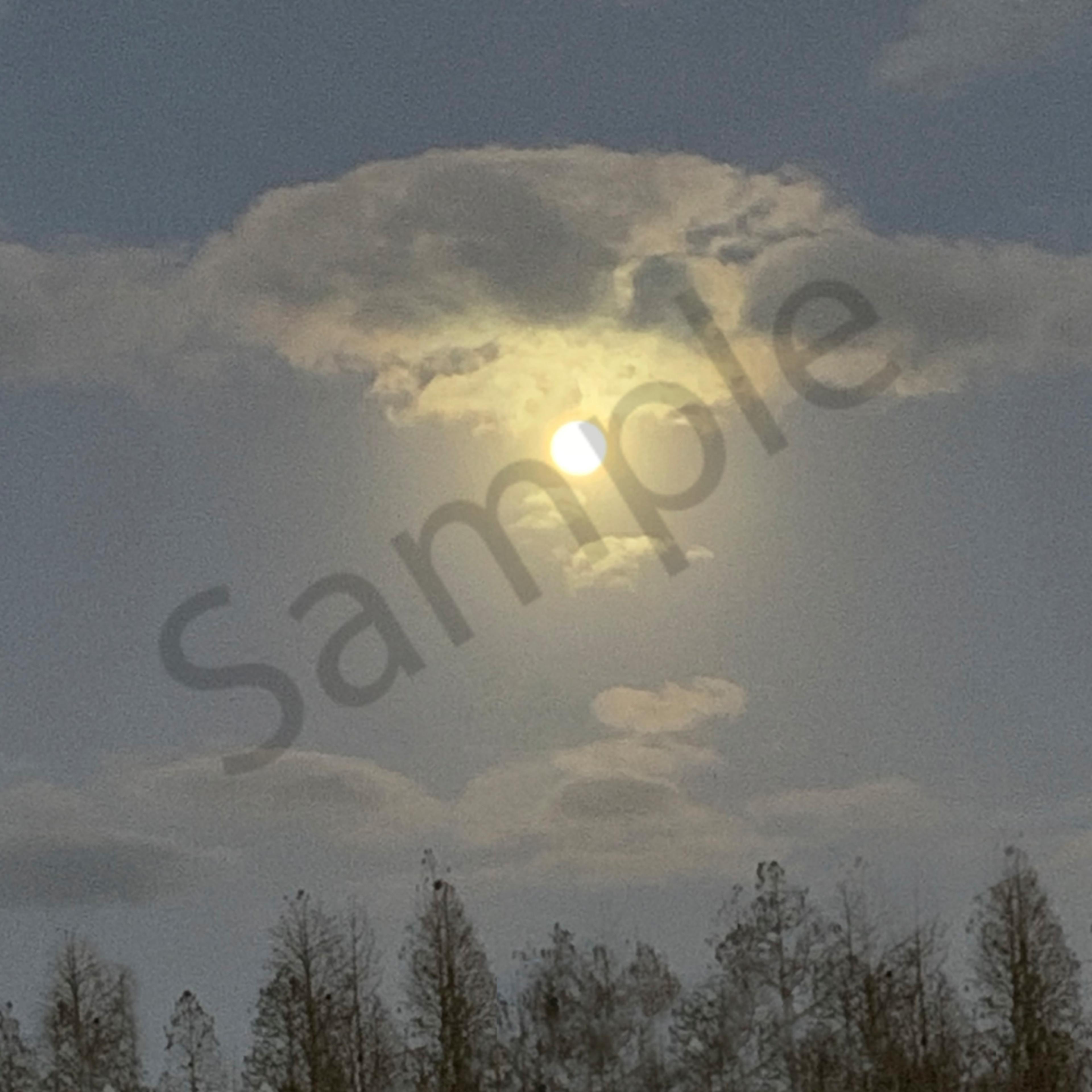 Full moon over the pines z8qsjv