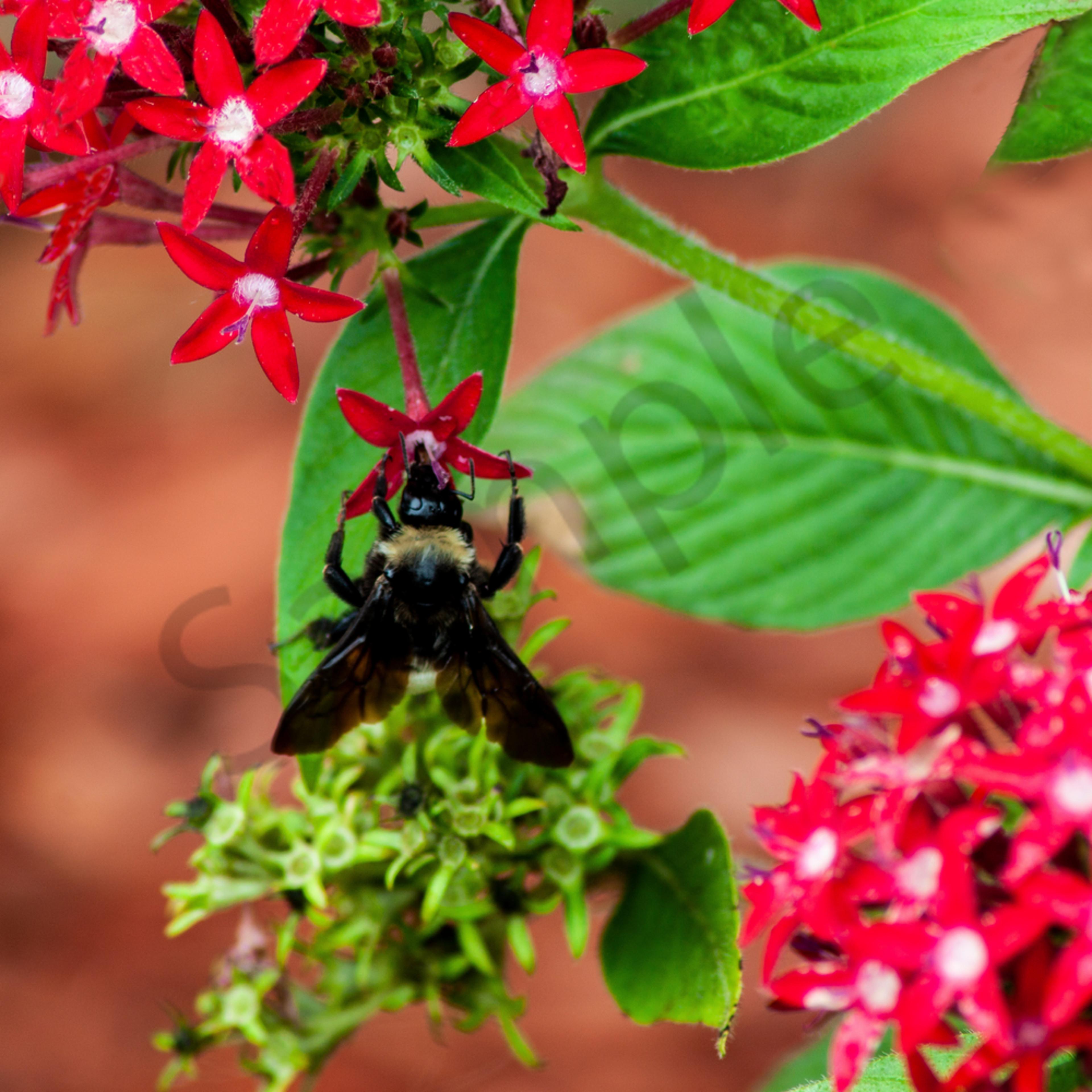 Worker bee cxmrxw