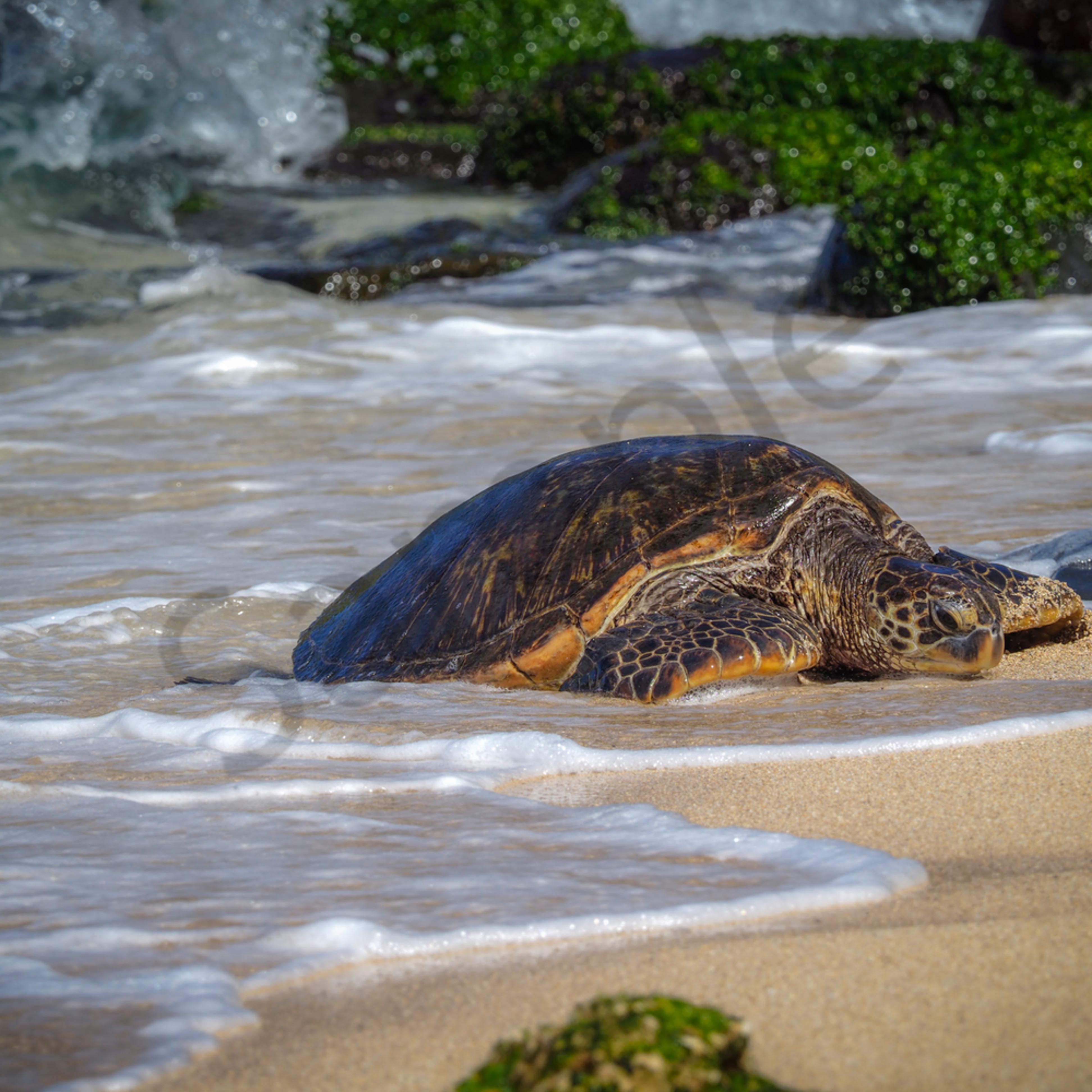 Sea turtles okjam2