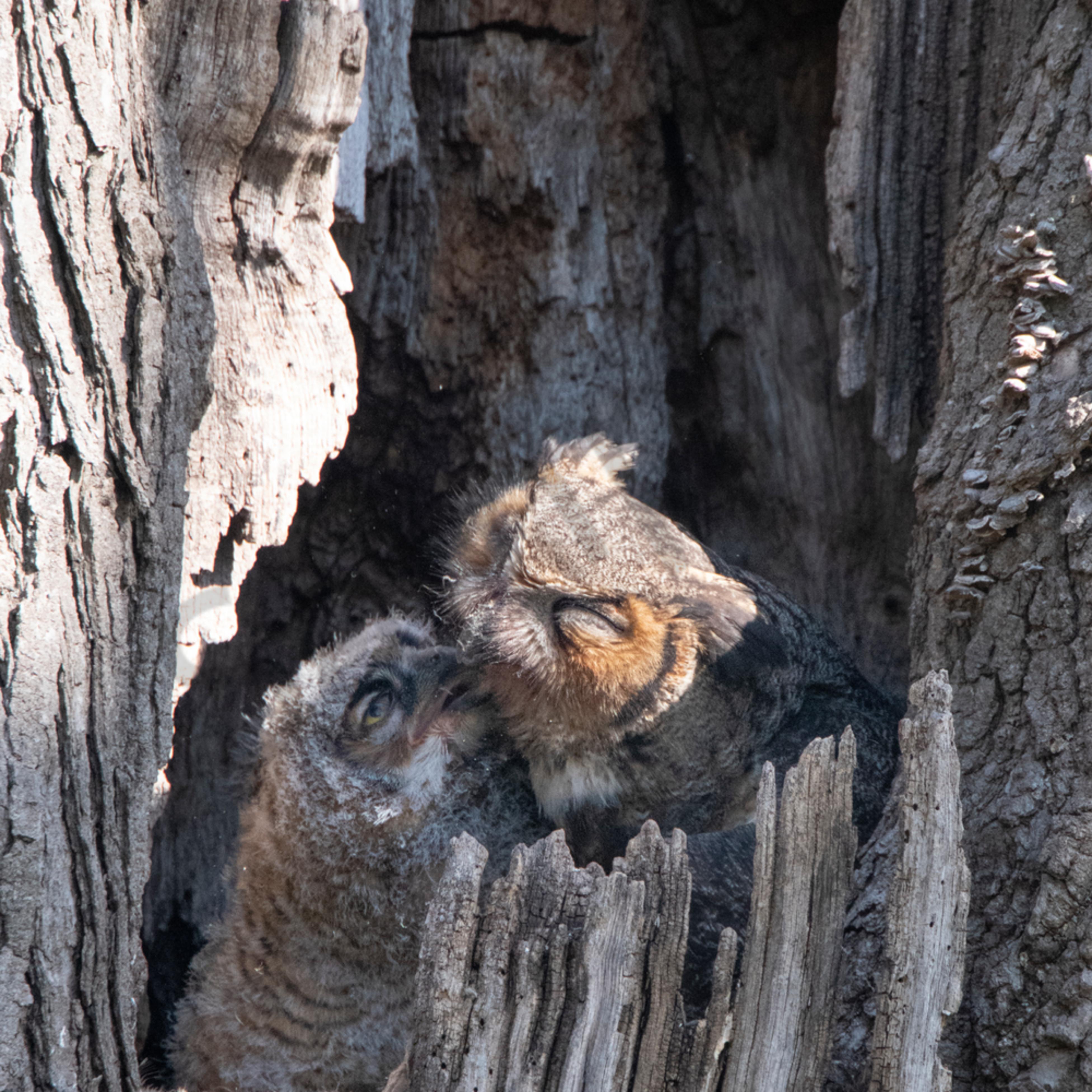 Owl kiss ggowx1