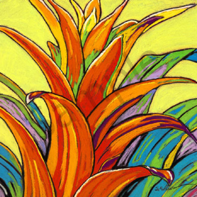Orange bromeliad web uj2oas