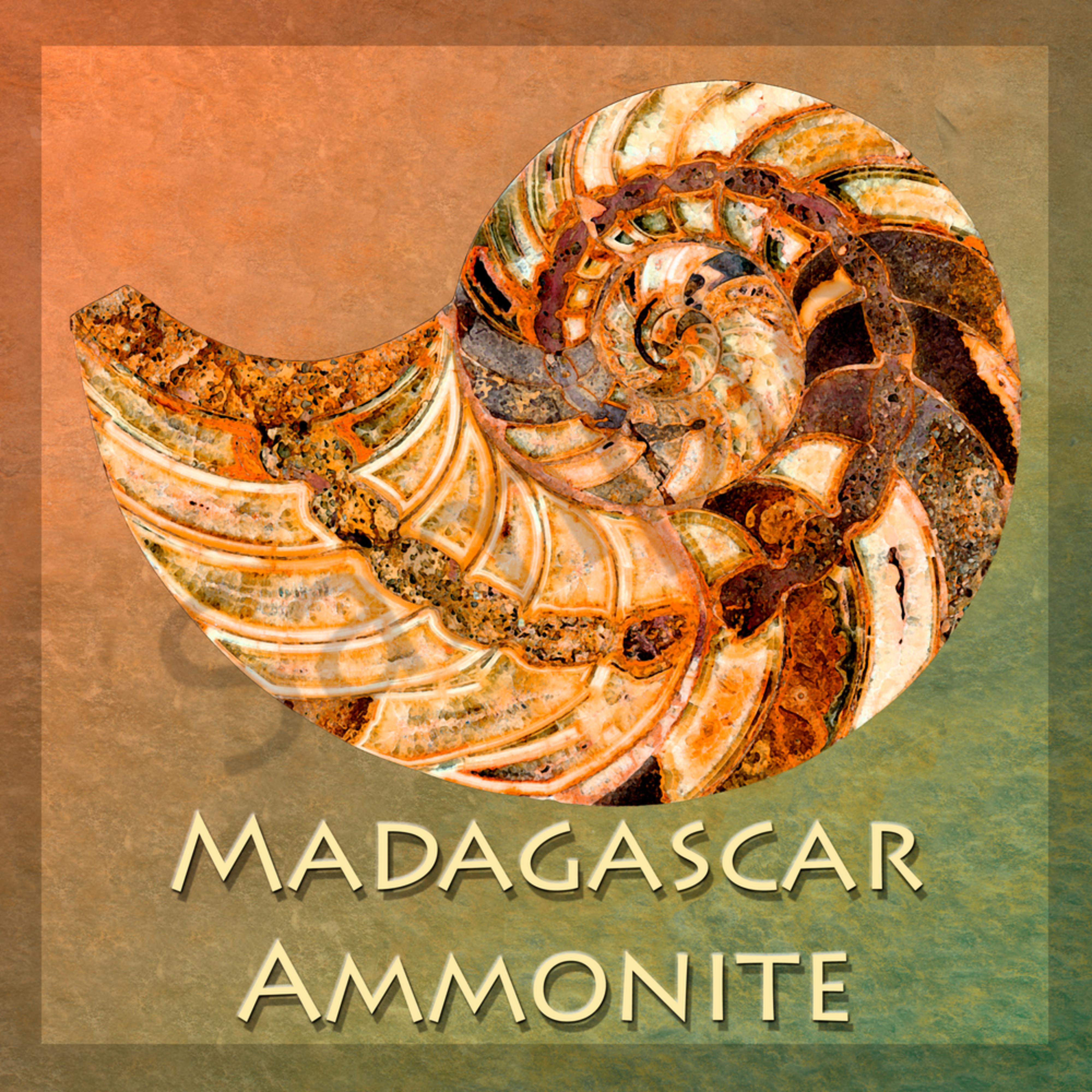 Amonite madagascar with background zebuon