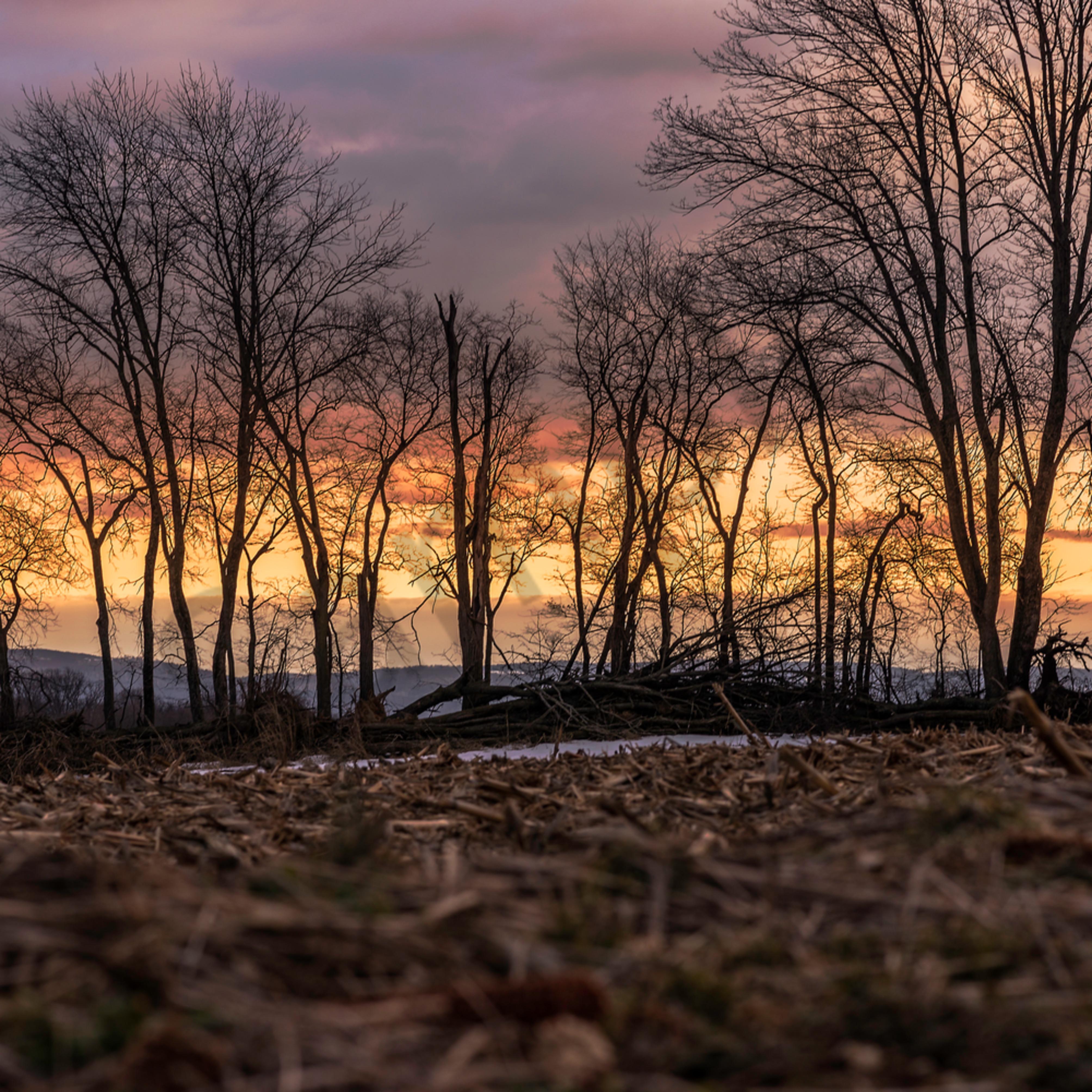 Winter trees bpmmpe