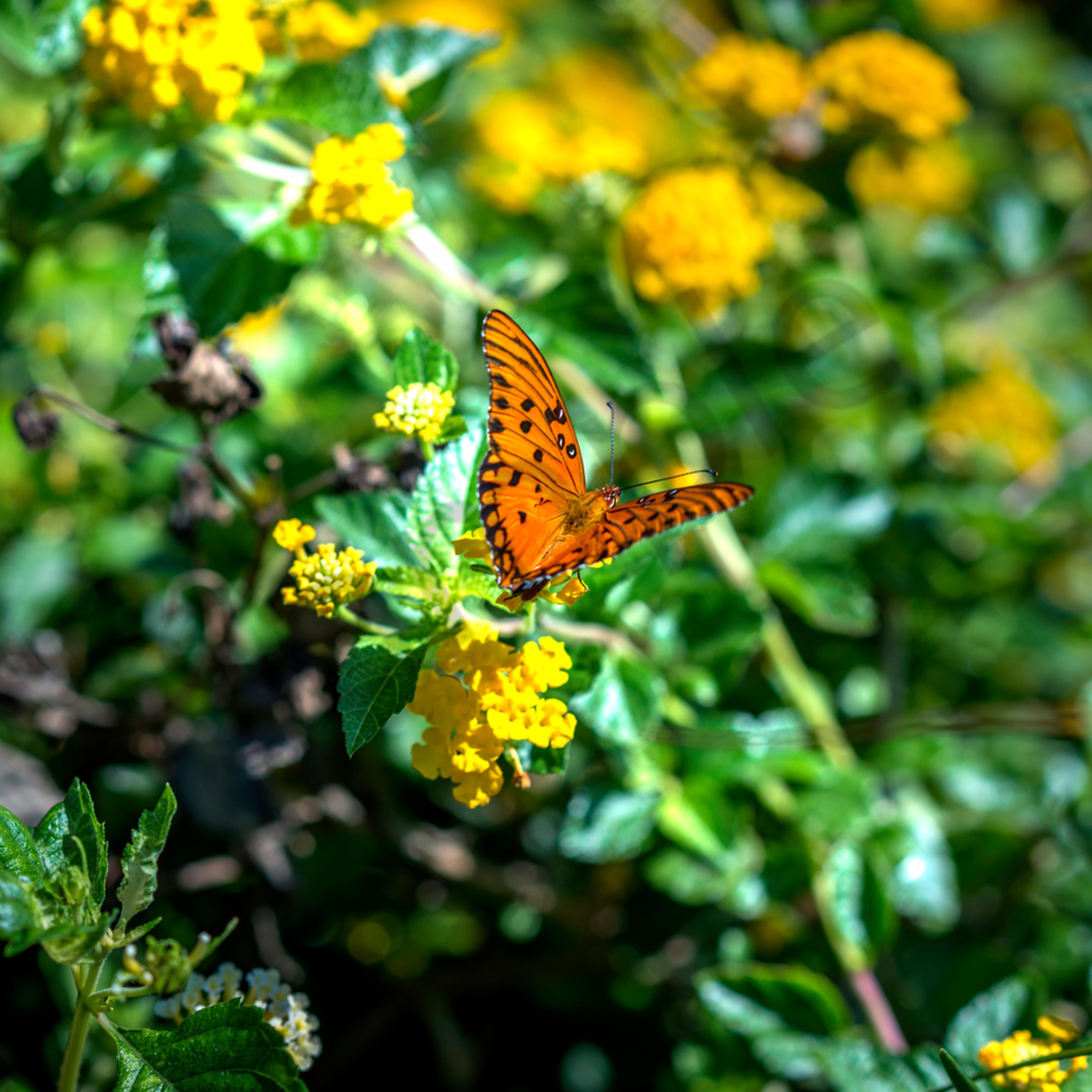 Butterfly alight y9czjg