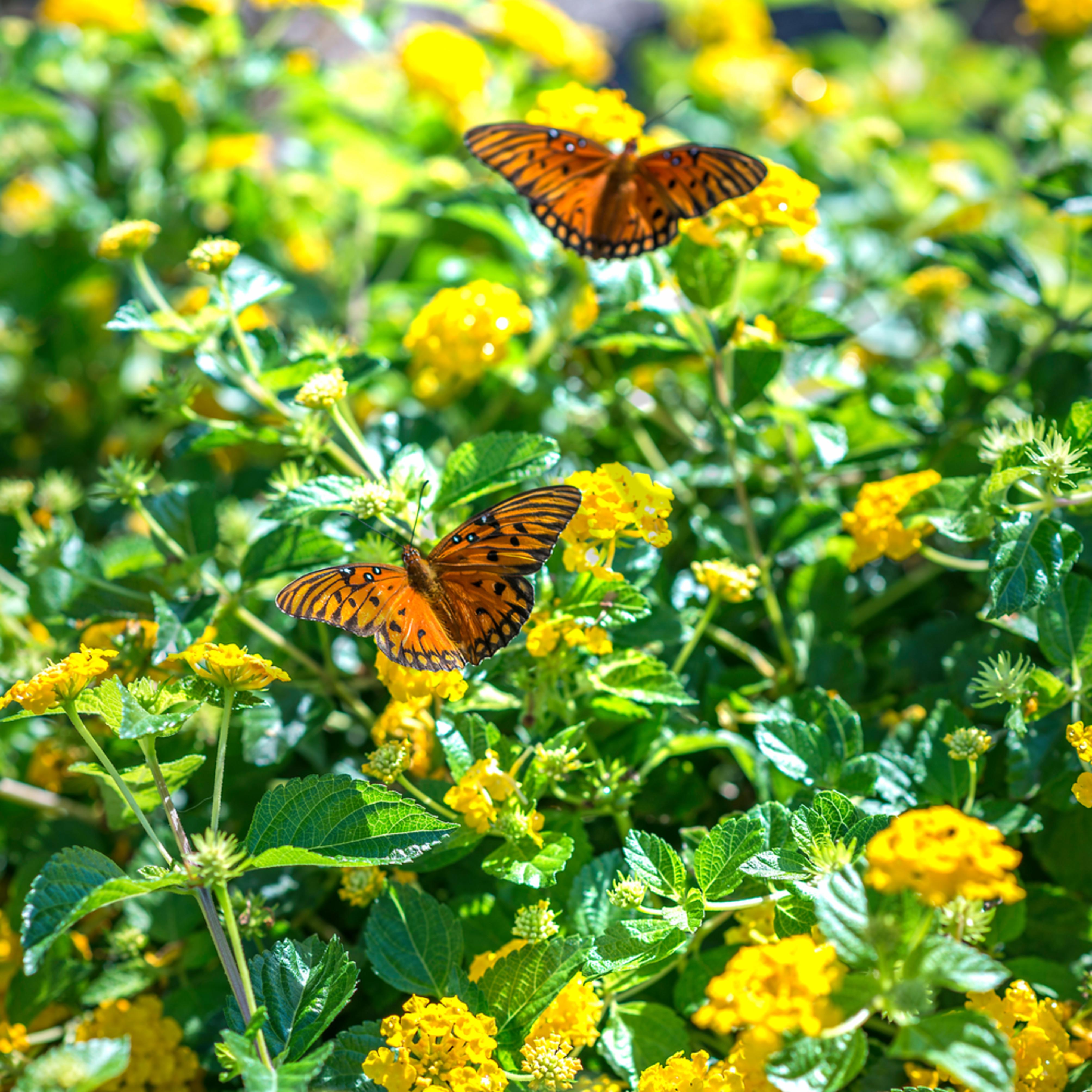 Fluttering flowers gunt8b