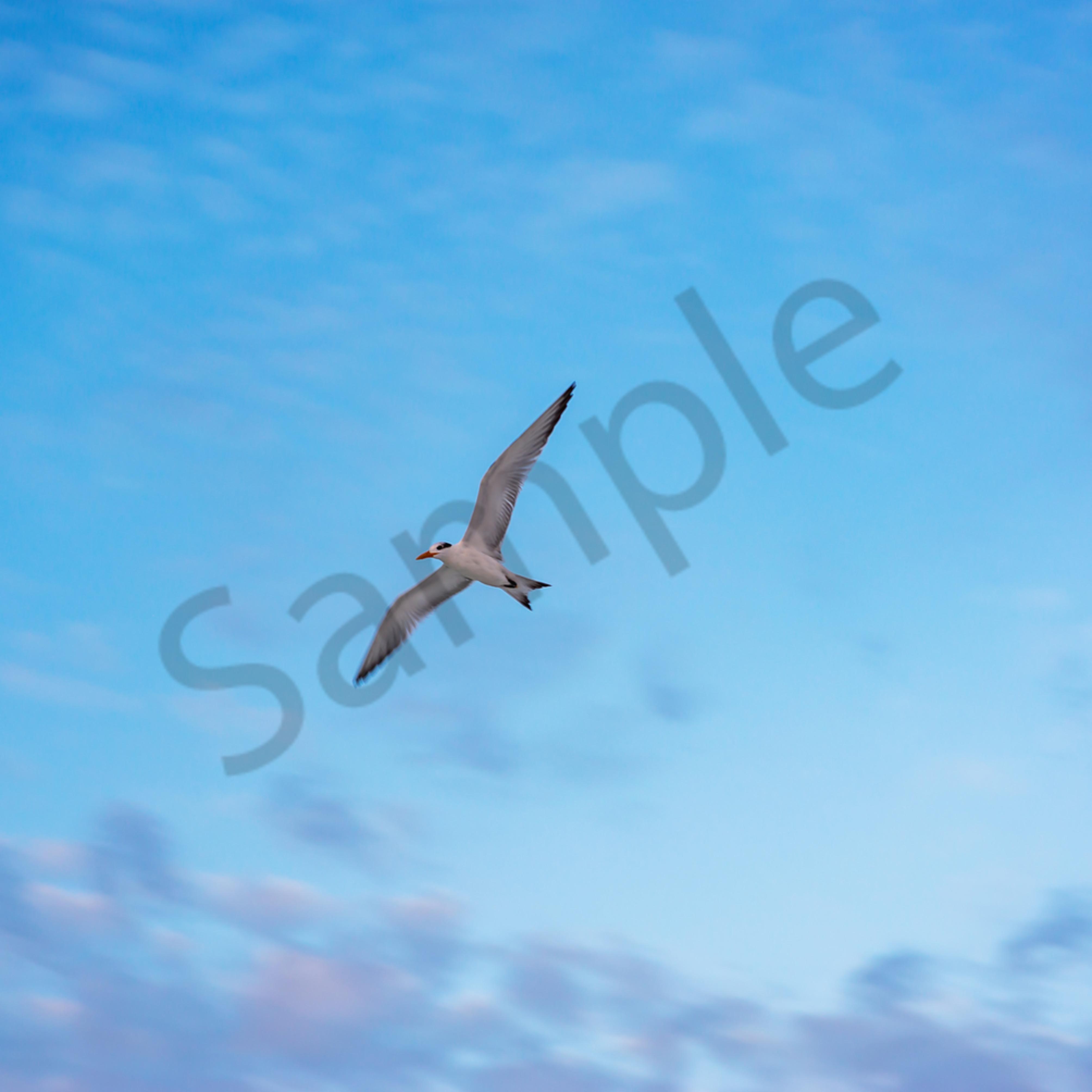 Wheeling and soaring o50ey1