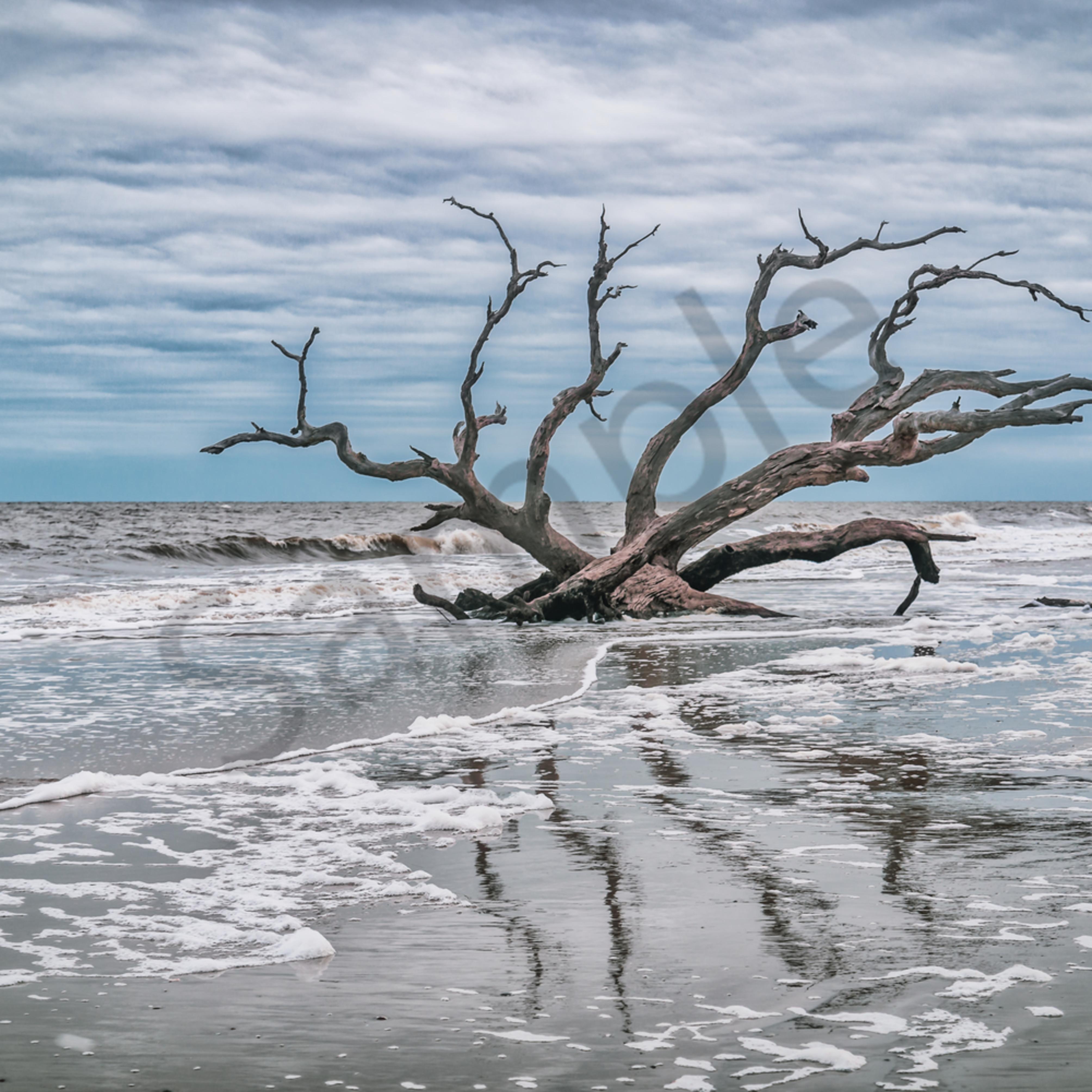 Driftwood reflections uzfenr