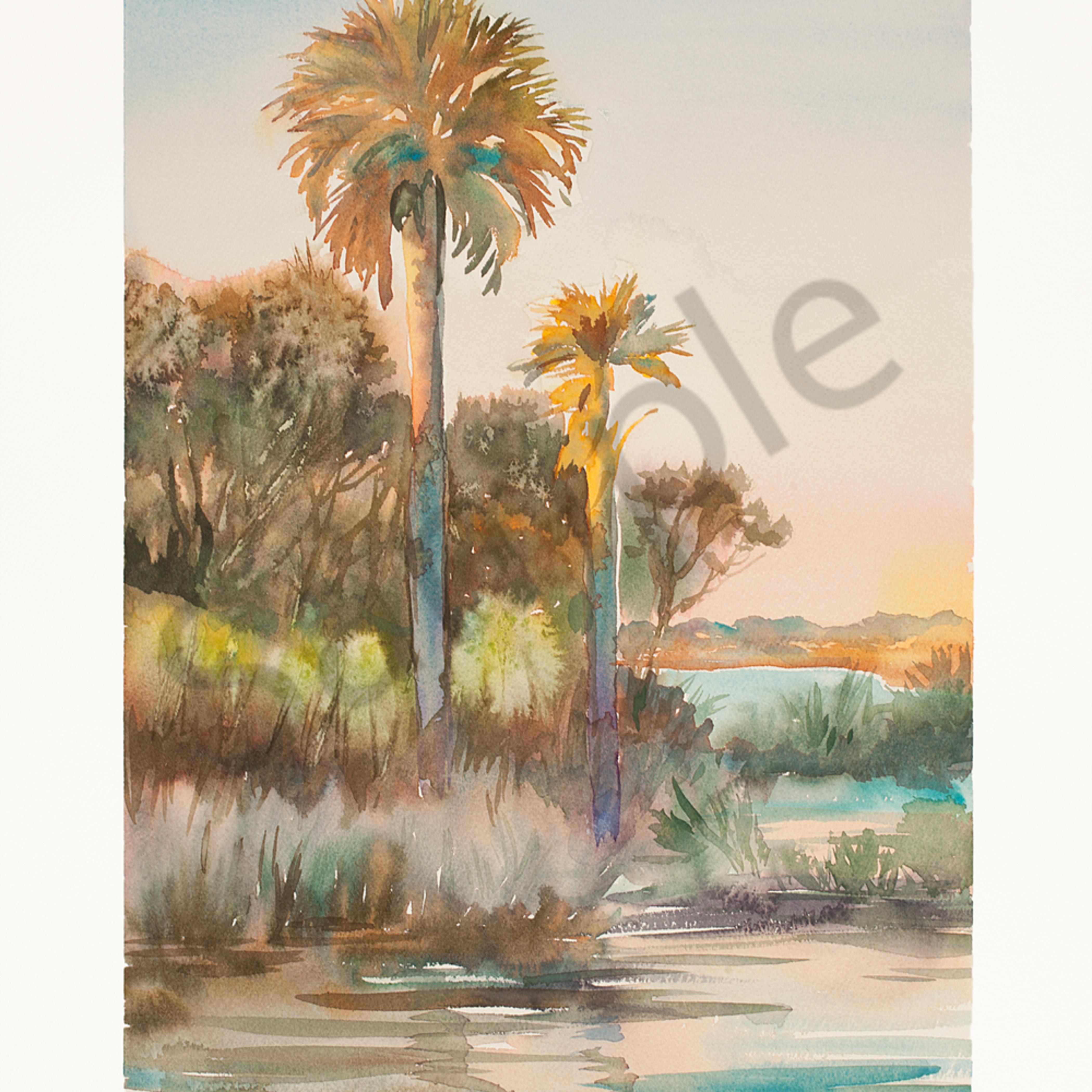 Guana palms 14 22x20 22 wc cp n52lz8