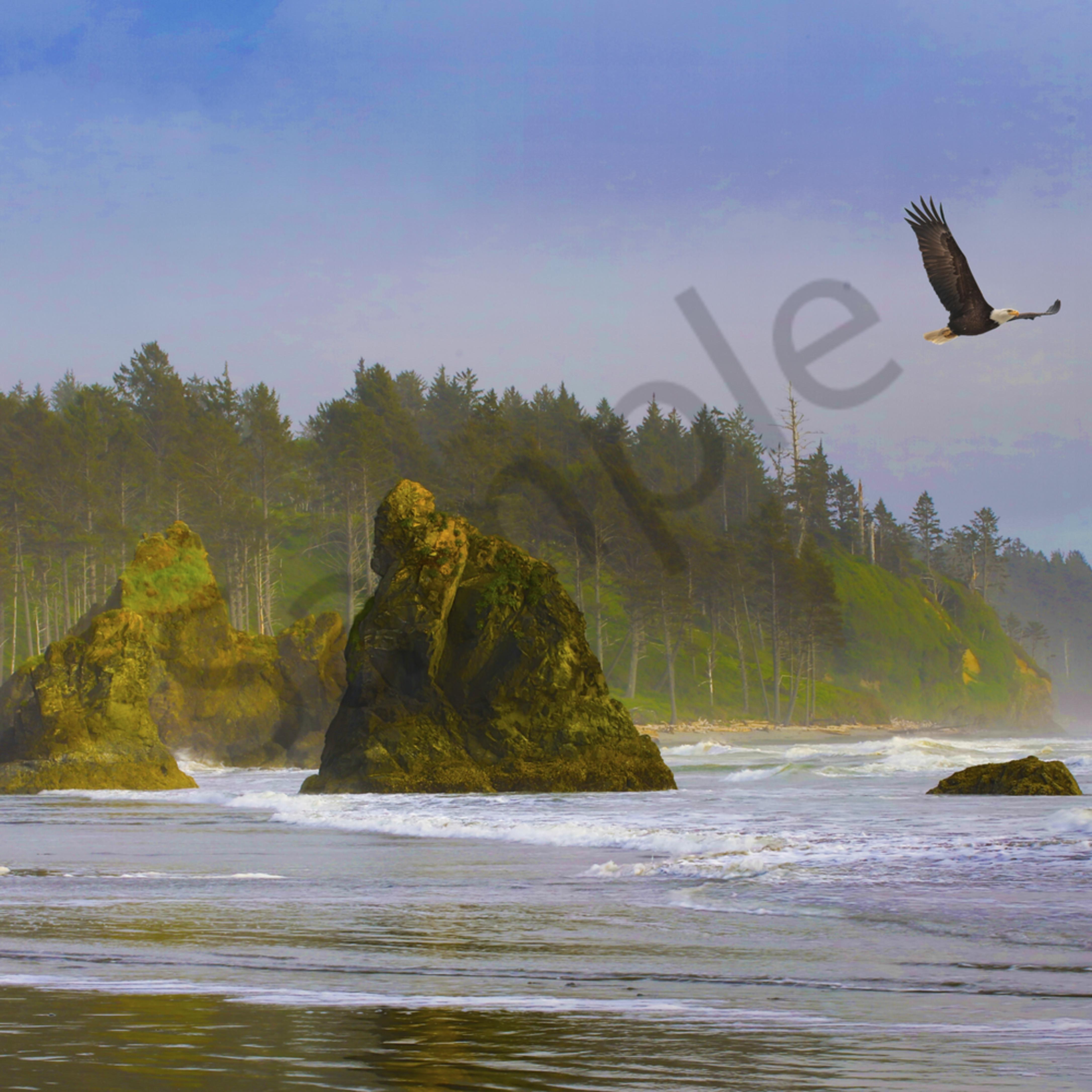Pnw ruby beach eagle 1 lqgn6q