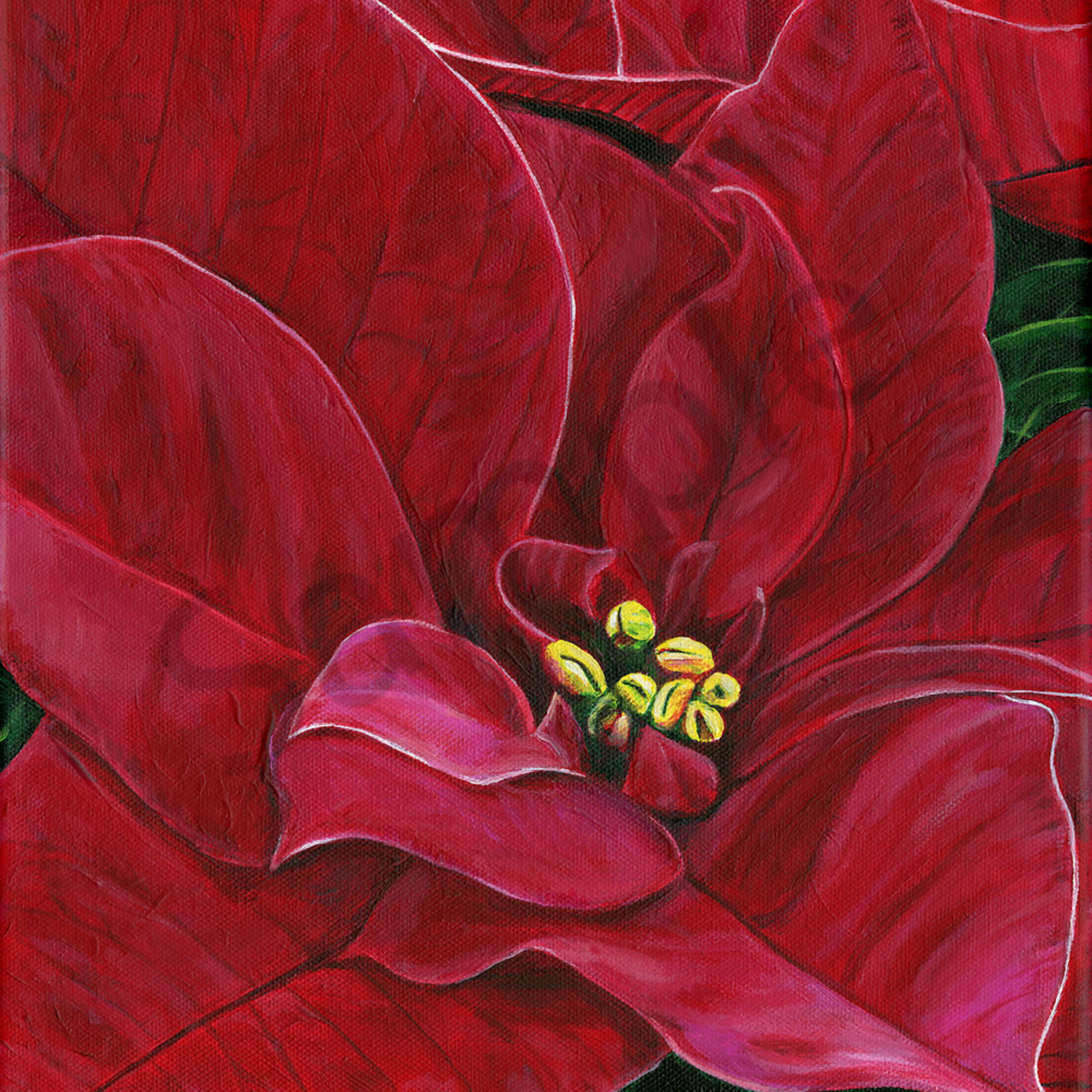 Poinsettia passion 400 jf73wg