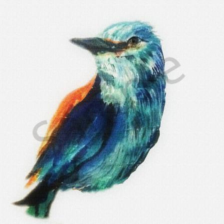 2016 pretty bird uosv79