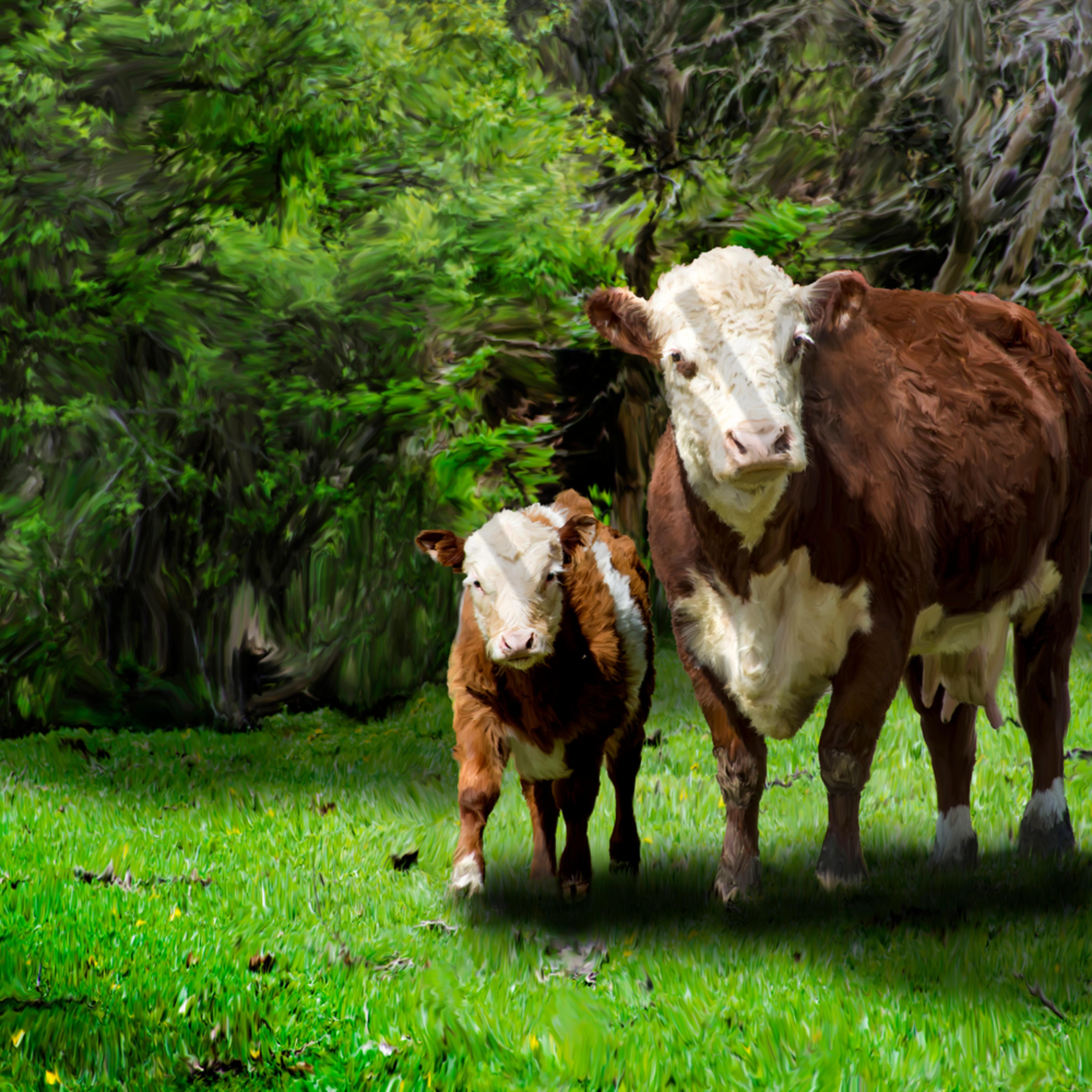 Cow and calf q35jr7