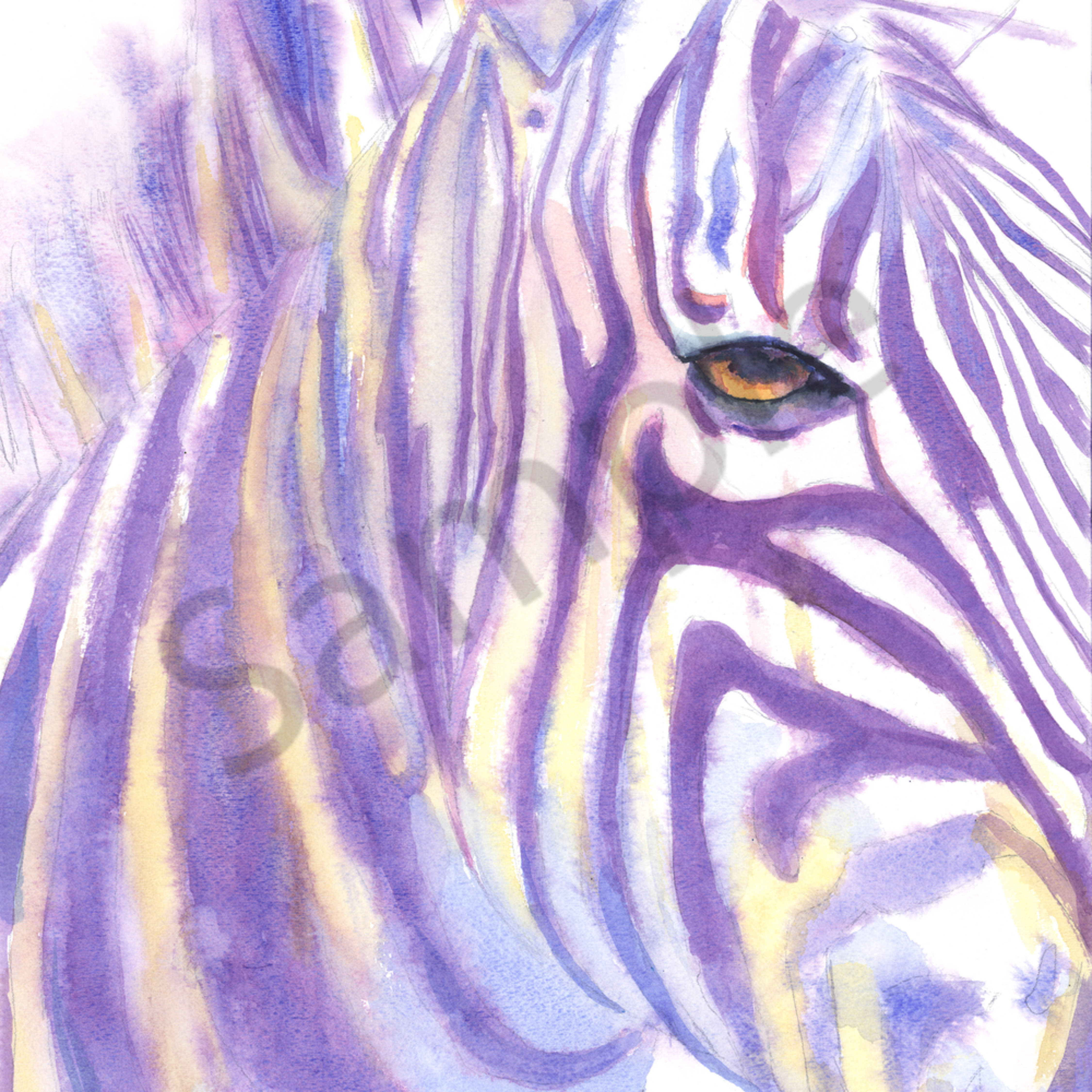 Zebra xuibj1