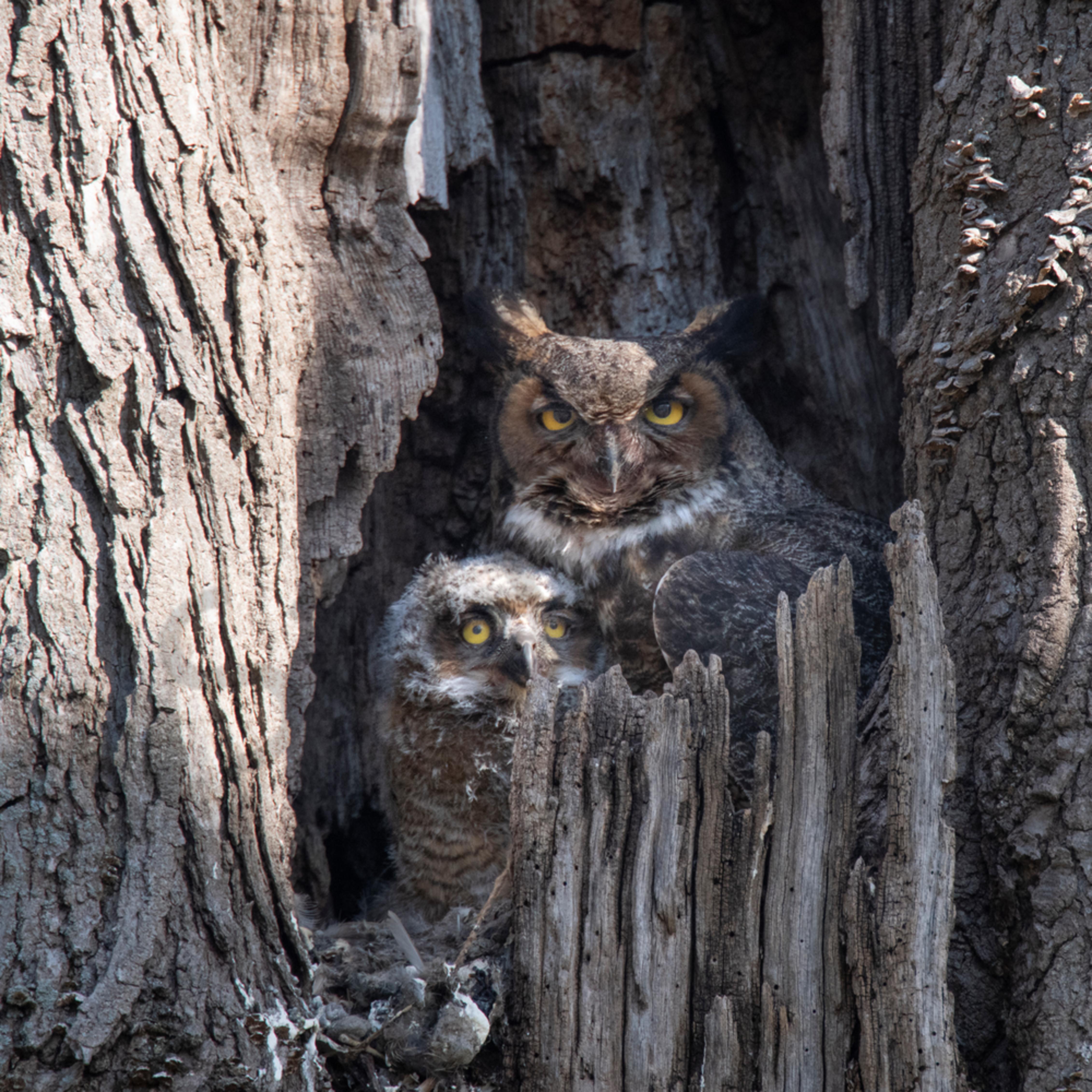 Two owl ffx5eu