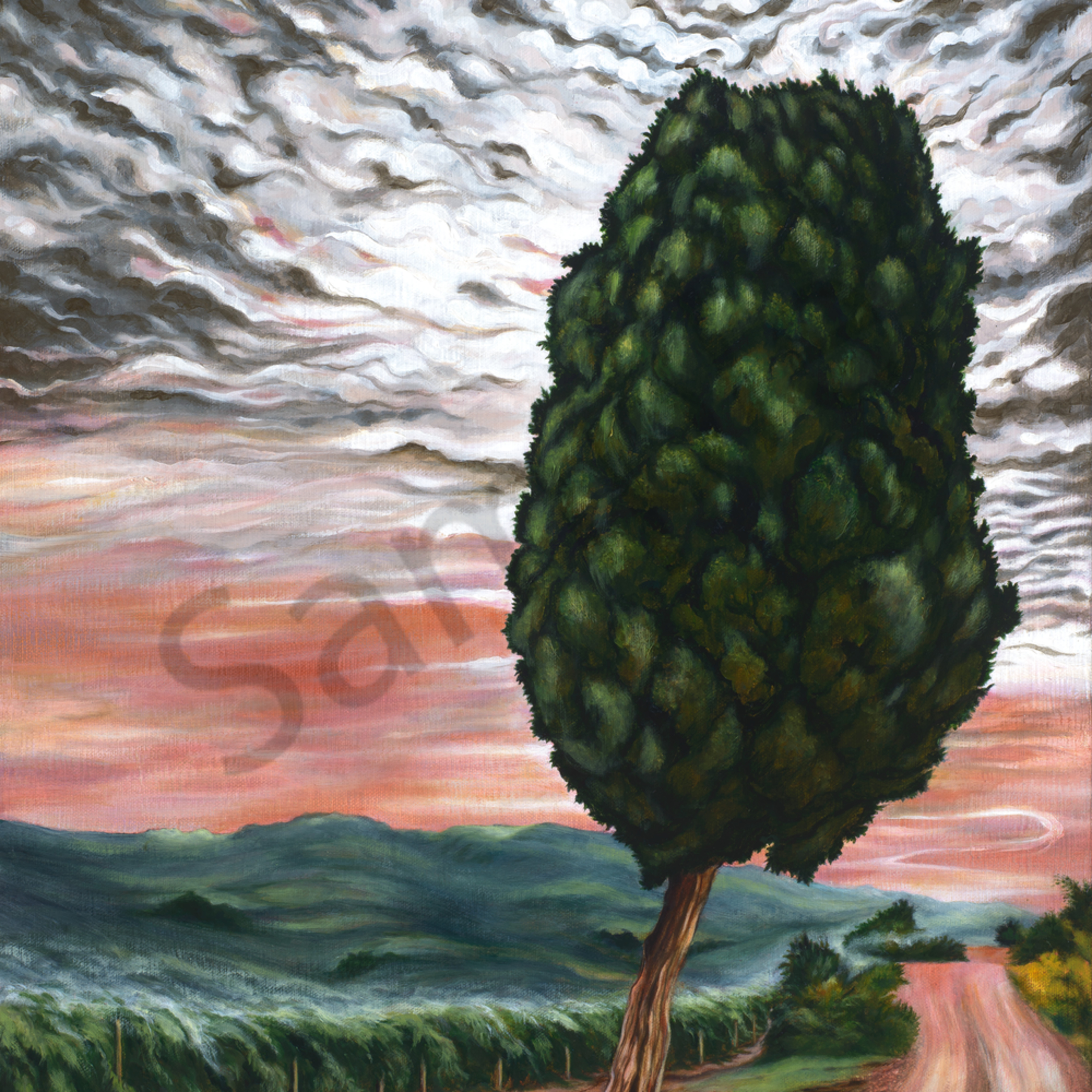 Cypress tree on the road to tuscany asp2y9