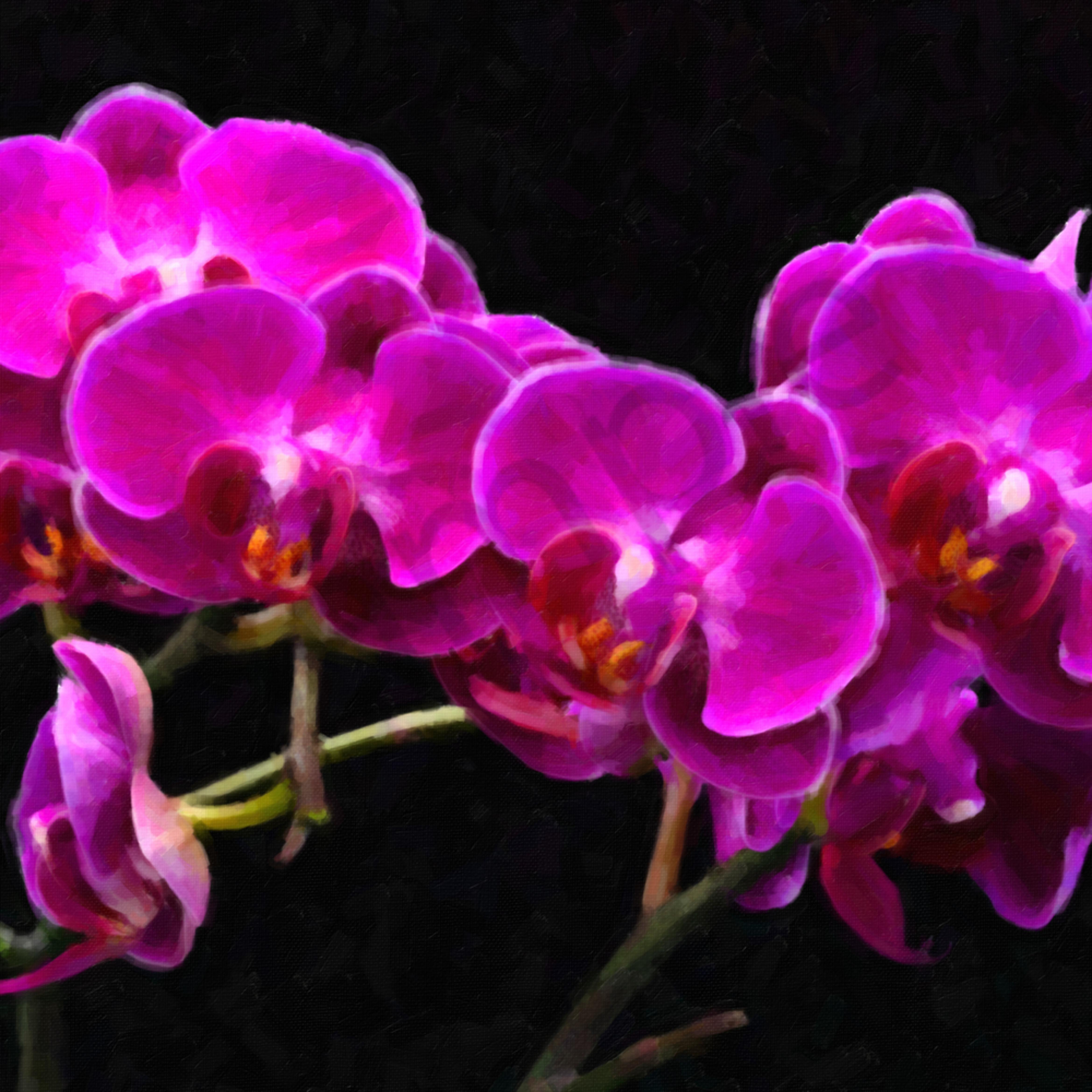 Orchids 3 fpkpek