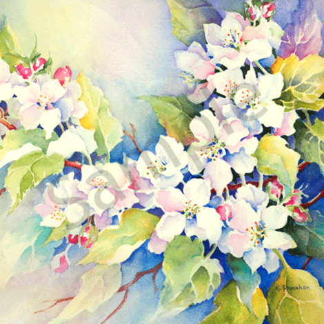 Apple blossoms qytaot