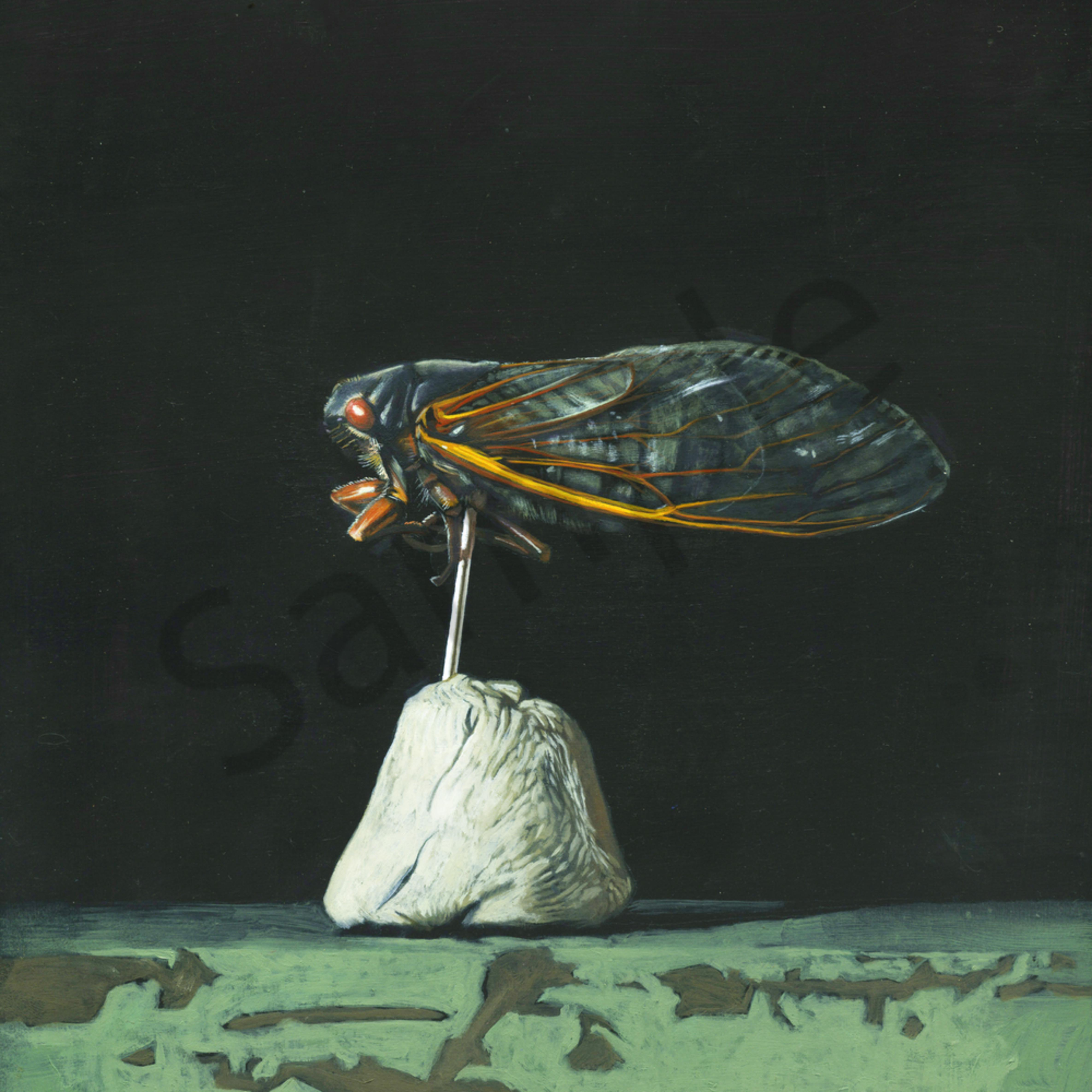 Cicada dark nqszbw