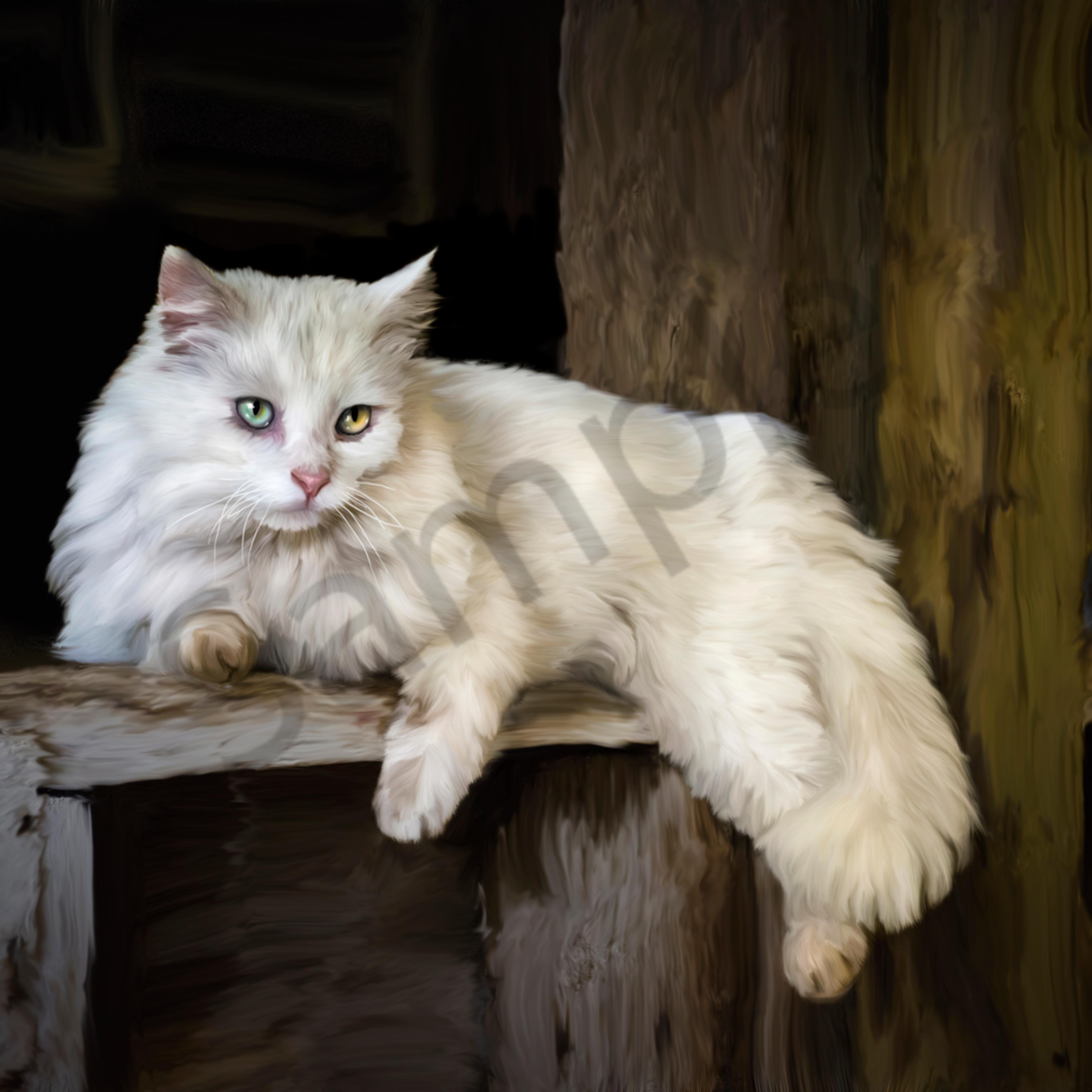 White barn cat wujwhs