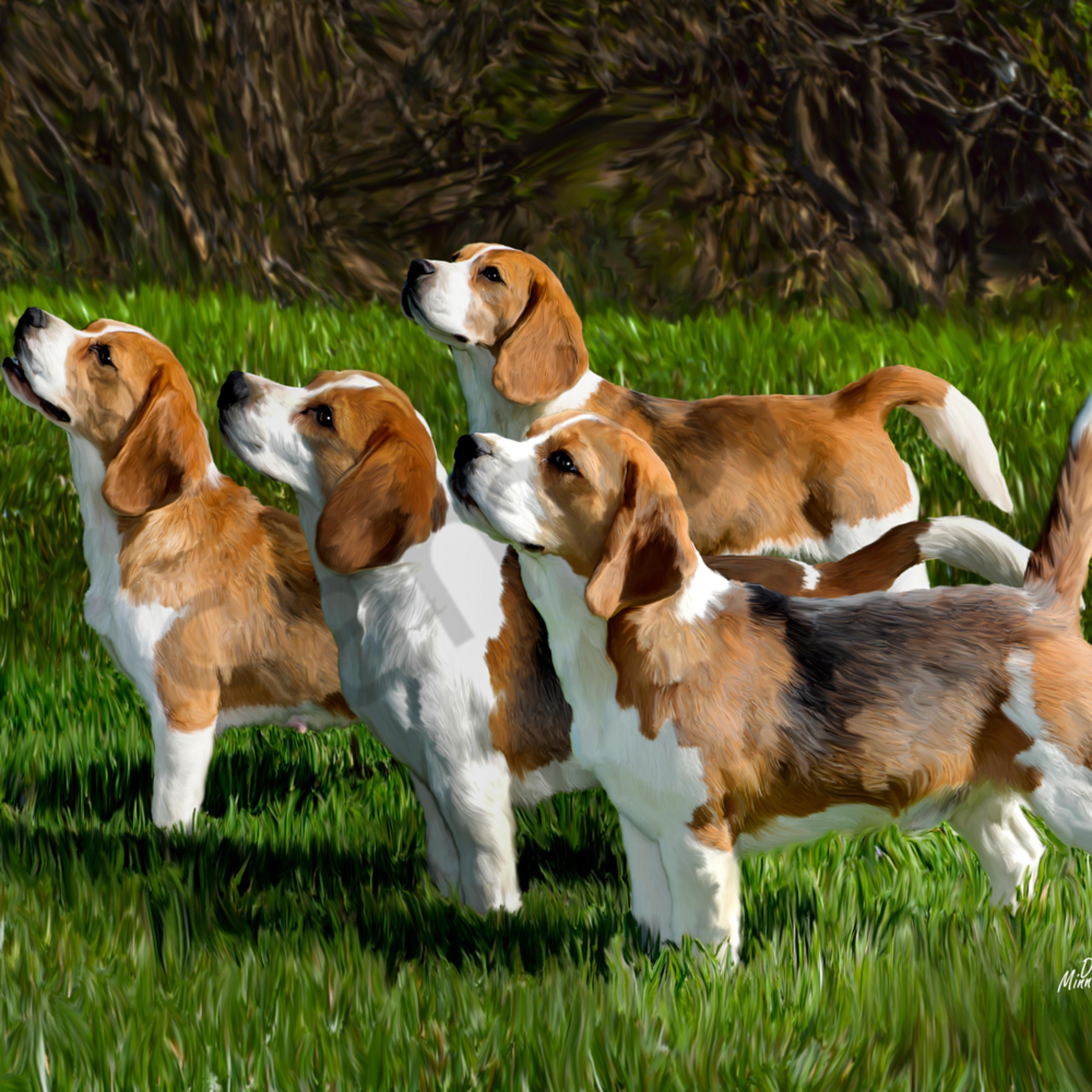 Top four beagles ldlegl