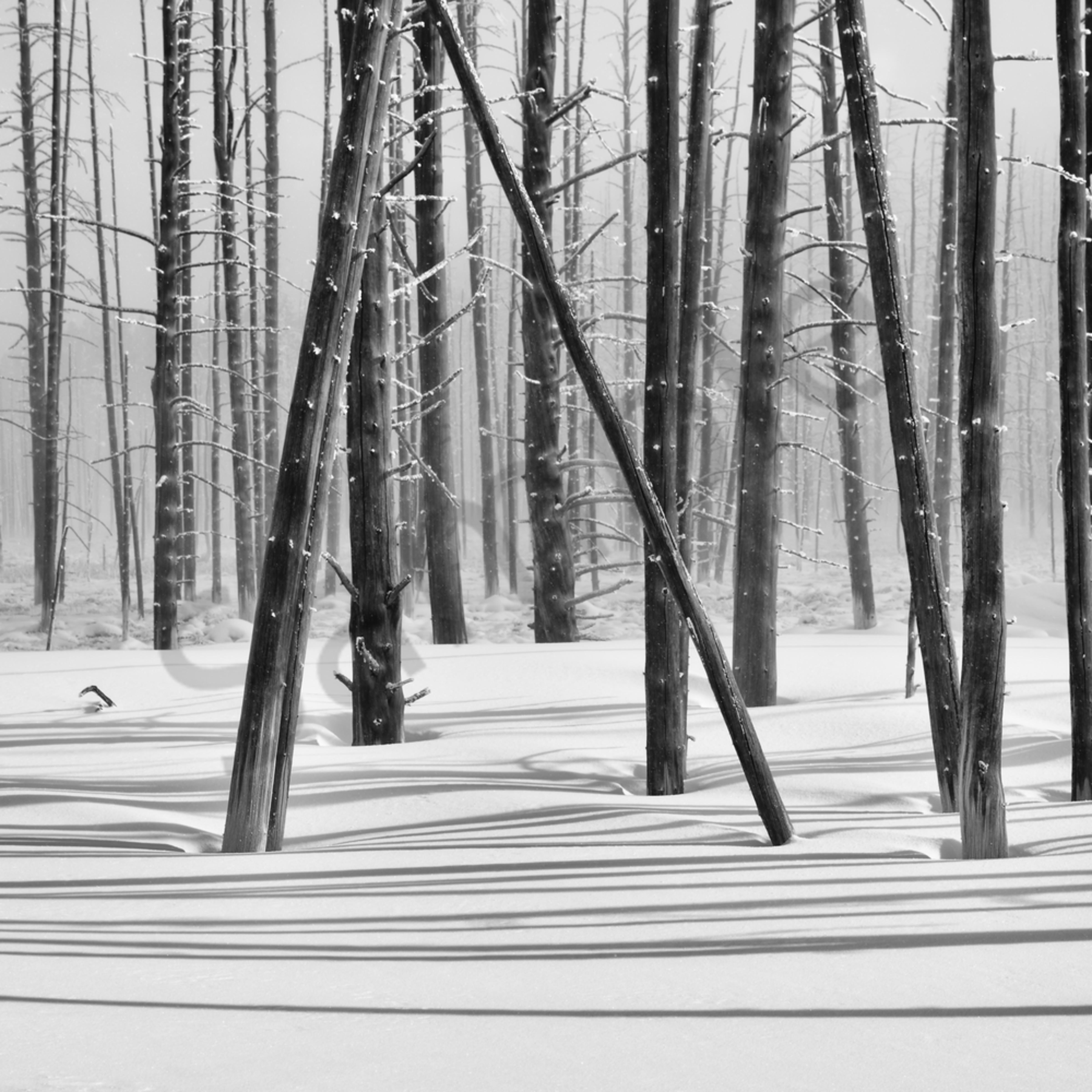 D85 2695 snowy woods 2020.02.18 hr ns bw ywvlnn