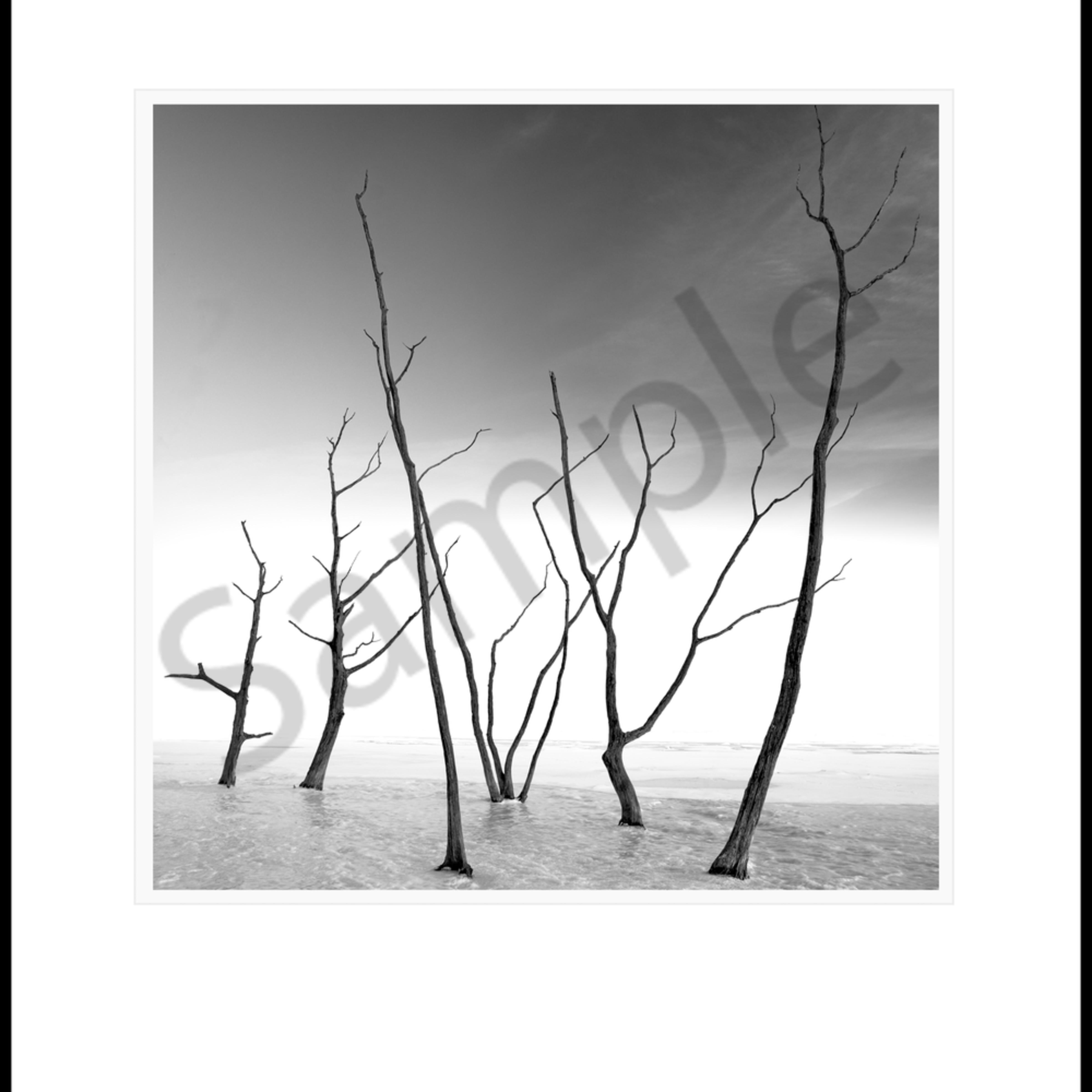 Frozen trees... frozen lake nzpq4q