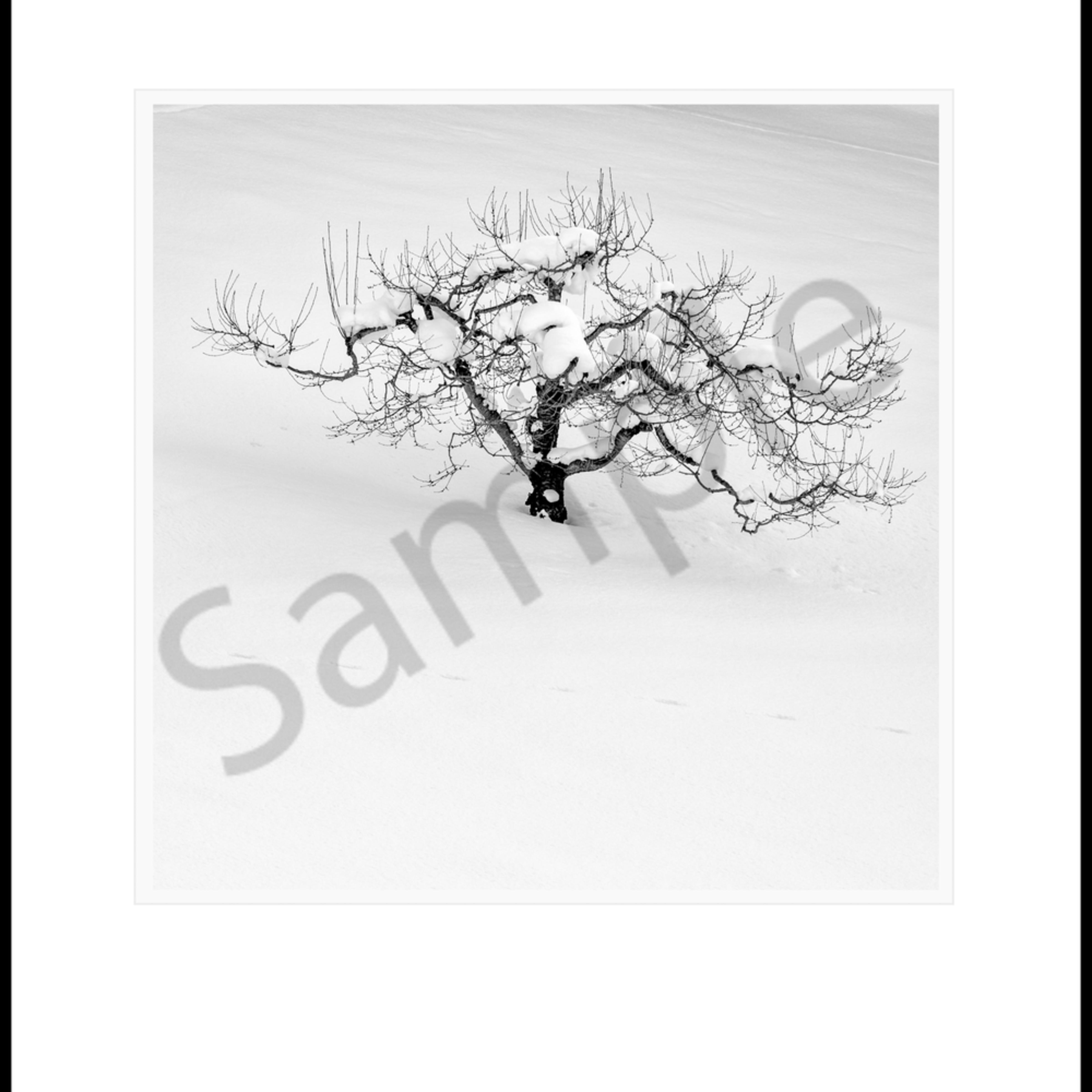 Orchard tree ujmdgu