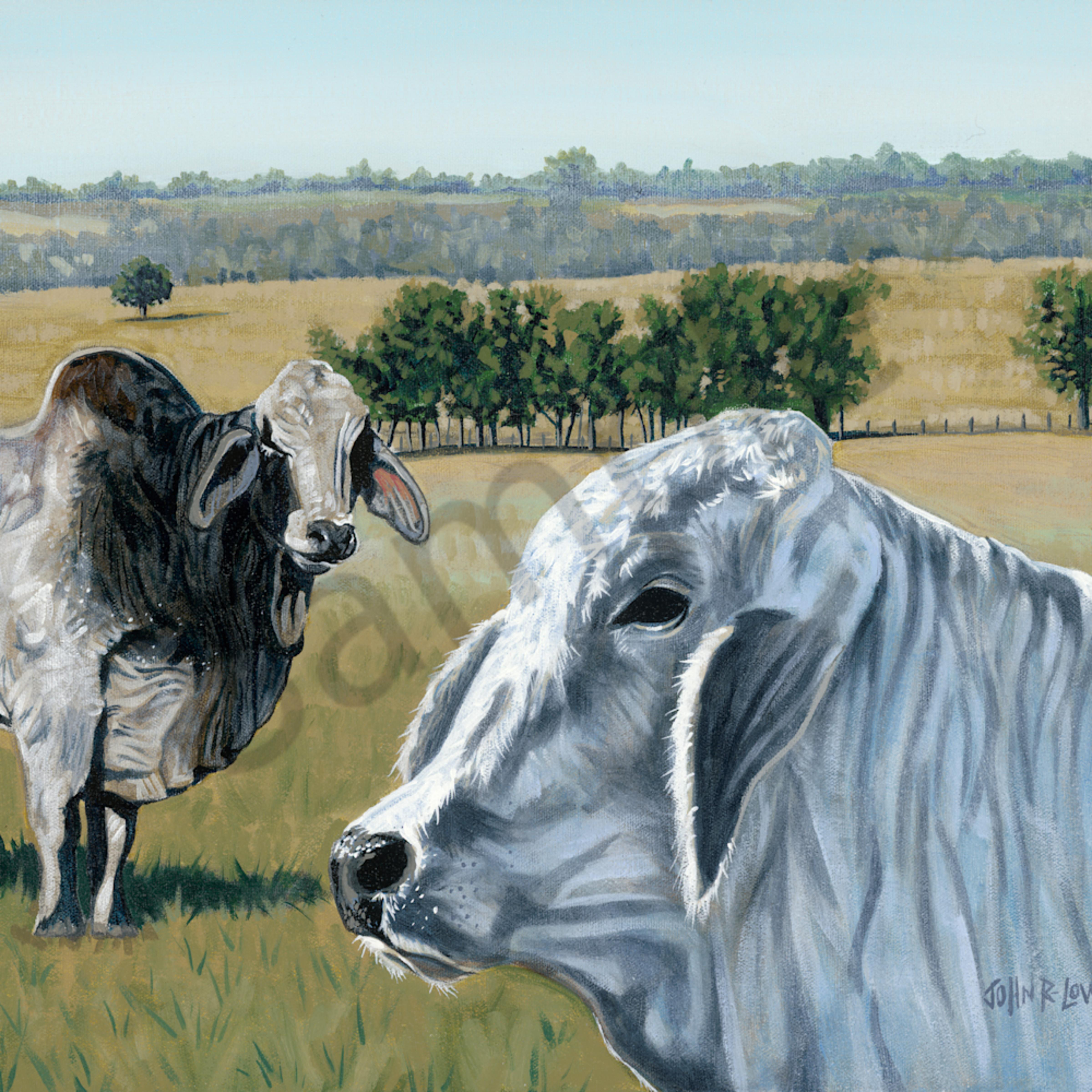 Warmkes cattle 40x32 150dpi cqj6oq