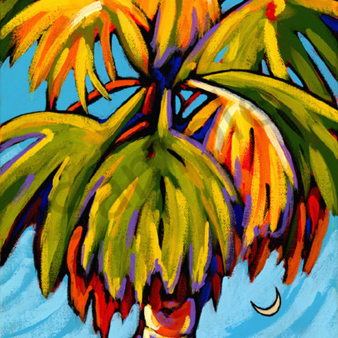 Carolina palm website s7ohgm