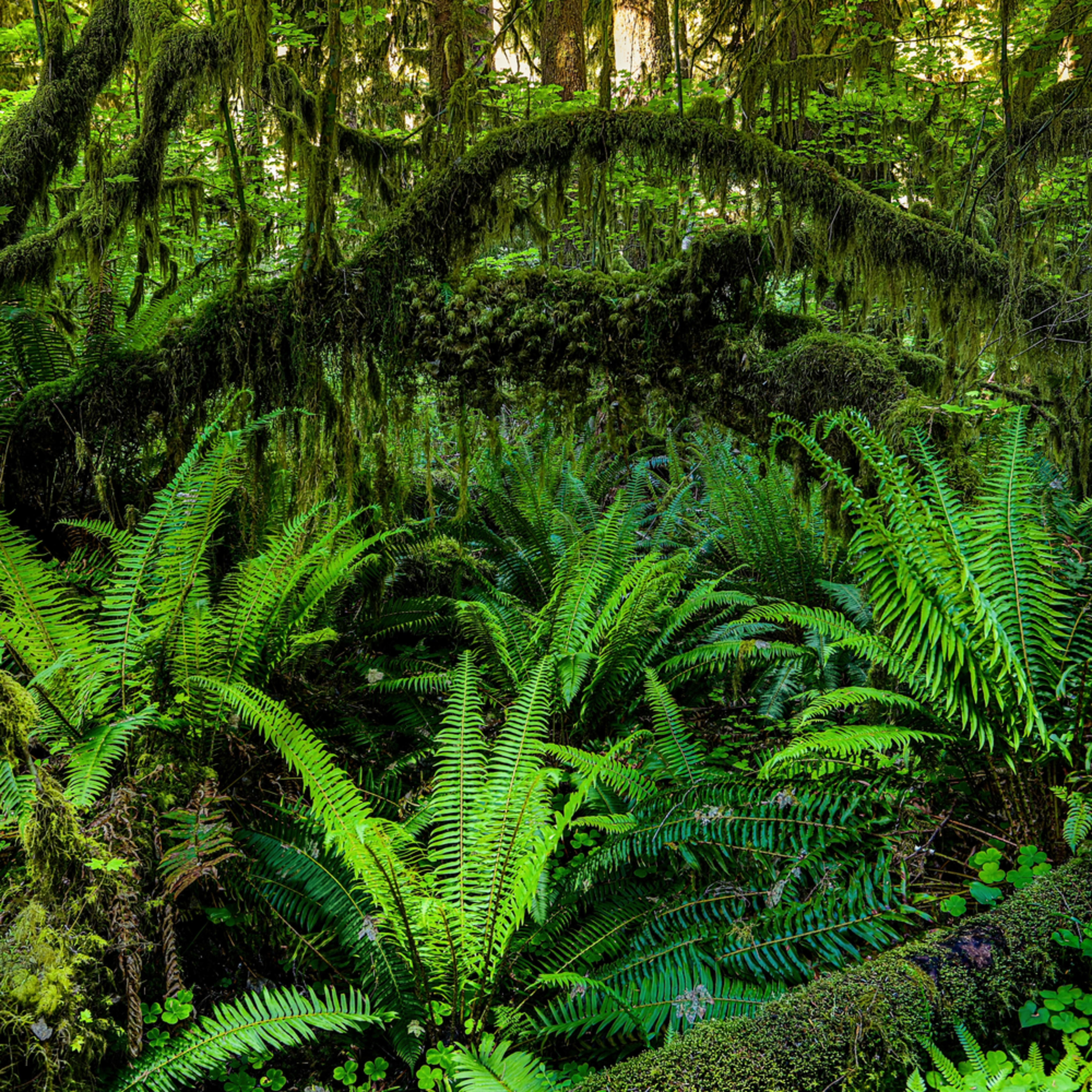 Pnw hoh rainforest 3 j7nvb9
