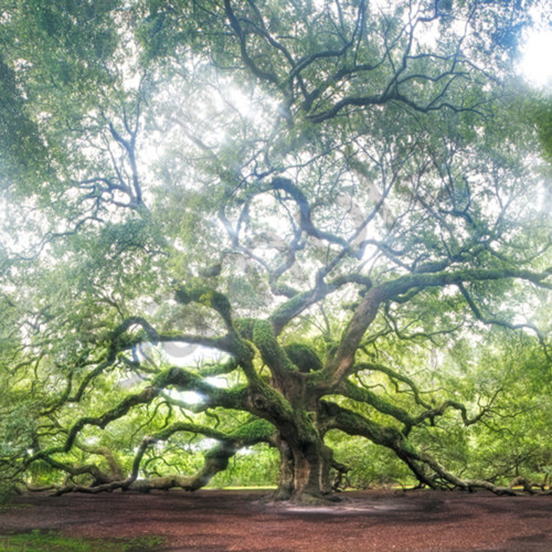 5067 angel oak ud4i18