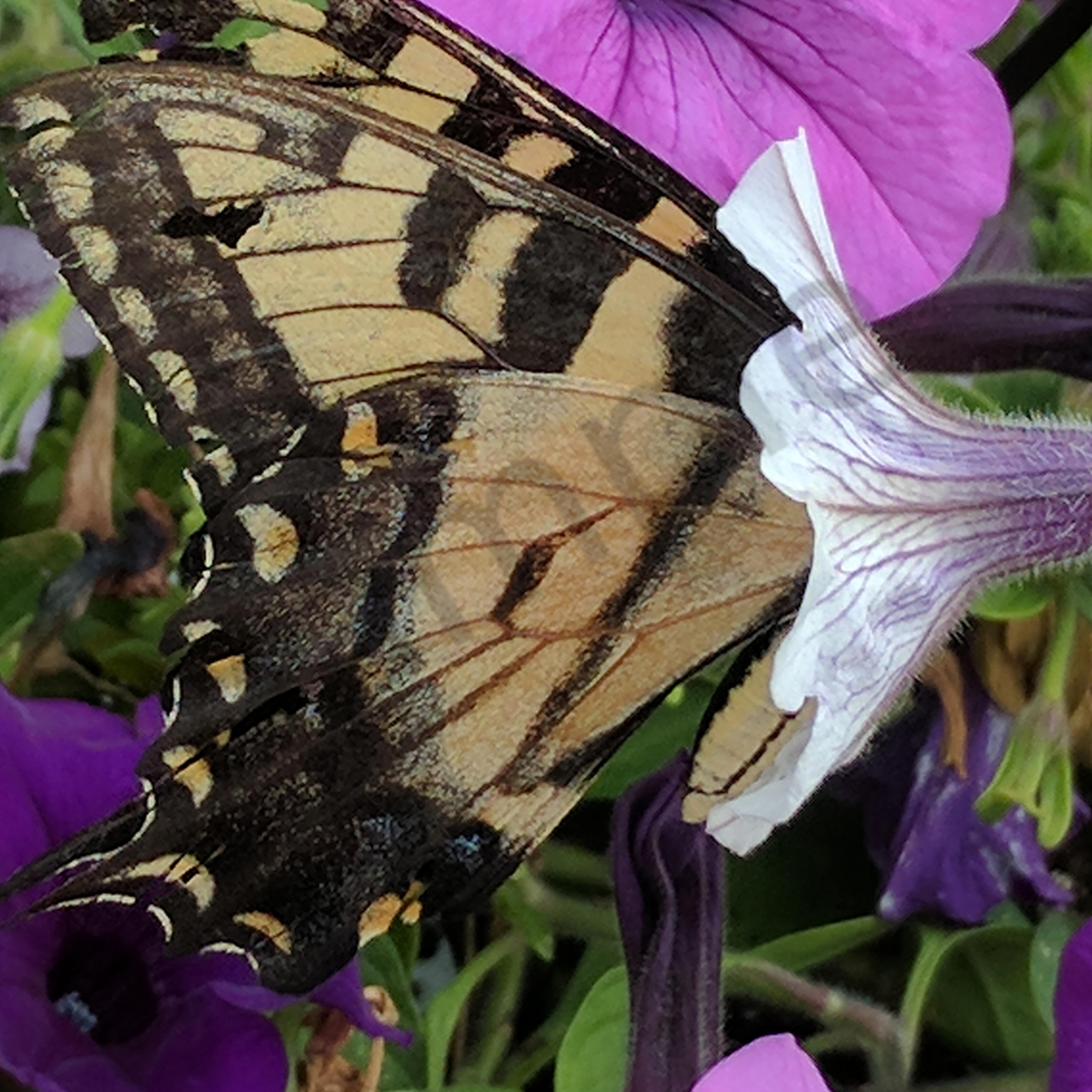 Img 20170801 172102 butterfly mqizj7