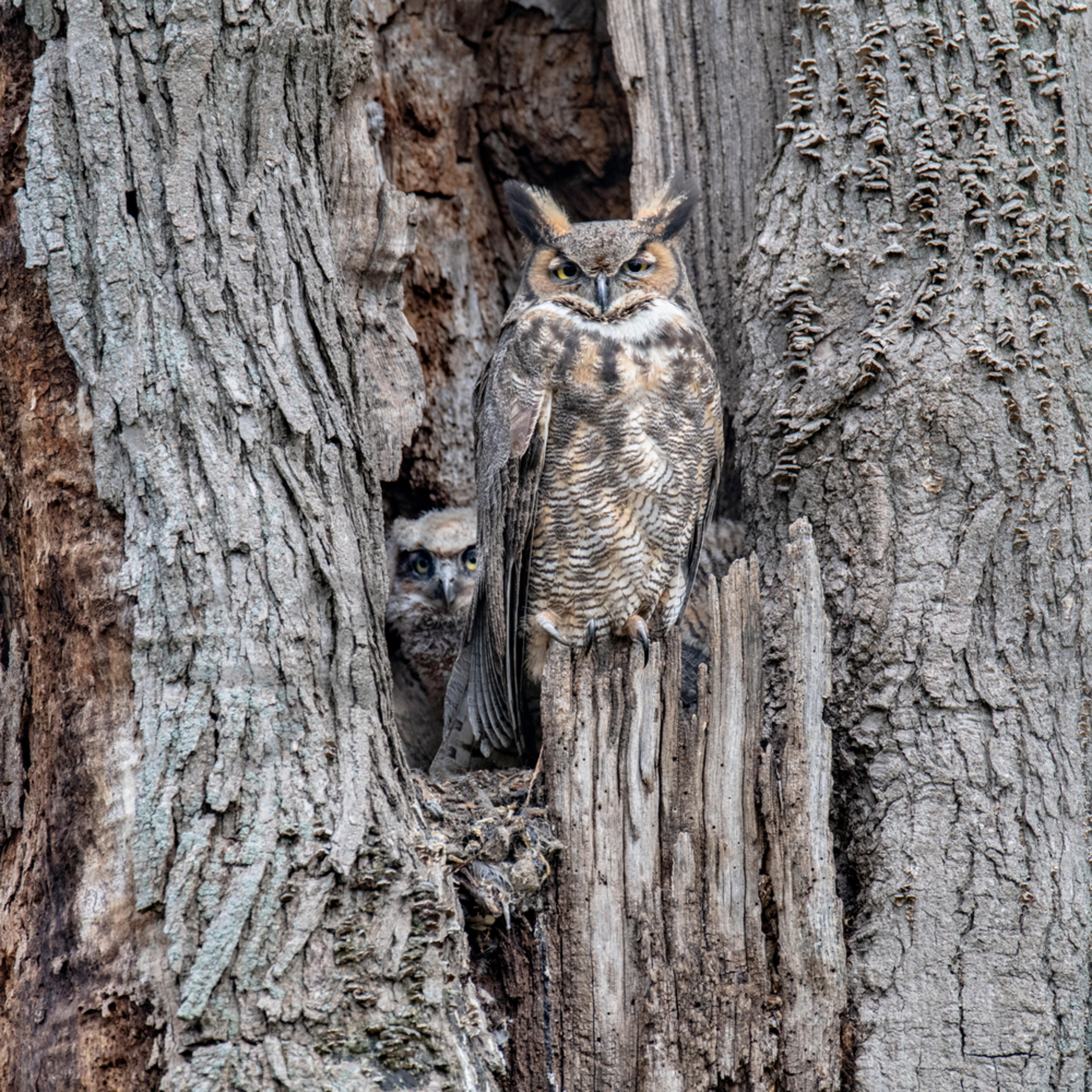 Mom gh owl suf52e