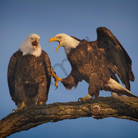 Eagle poke  1 final lr ijqjtx