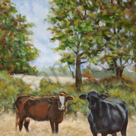 Cows adams sm c5uxw2