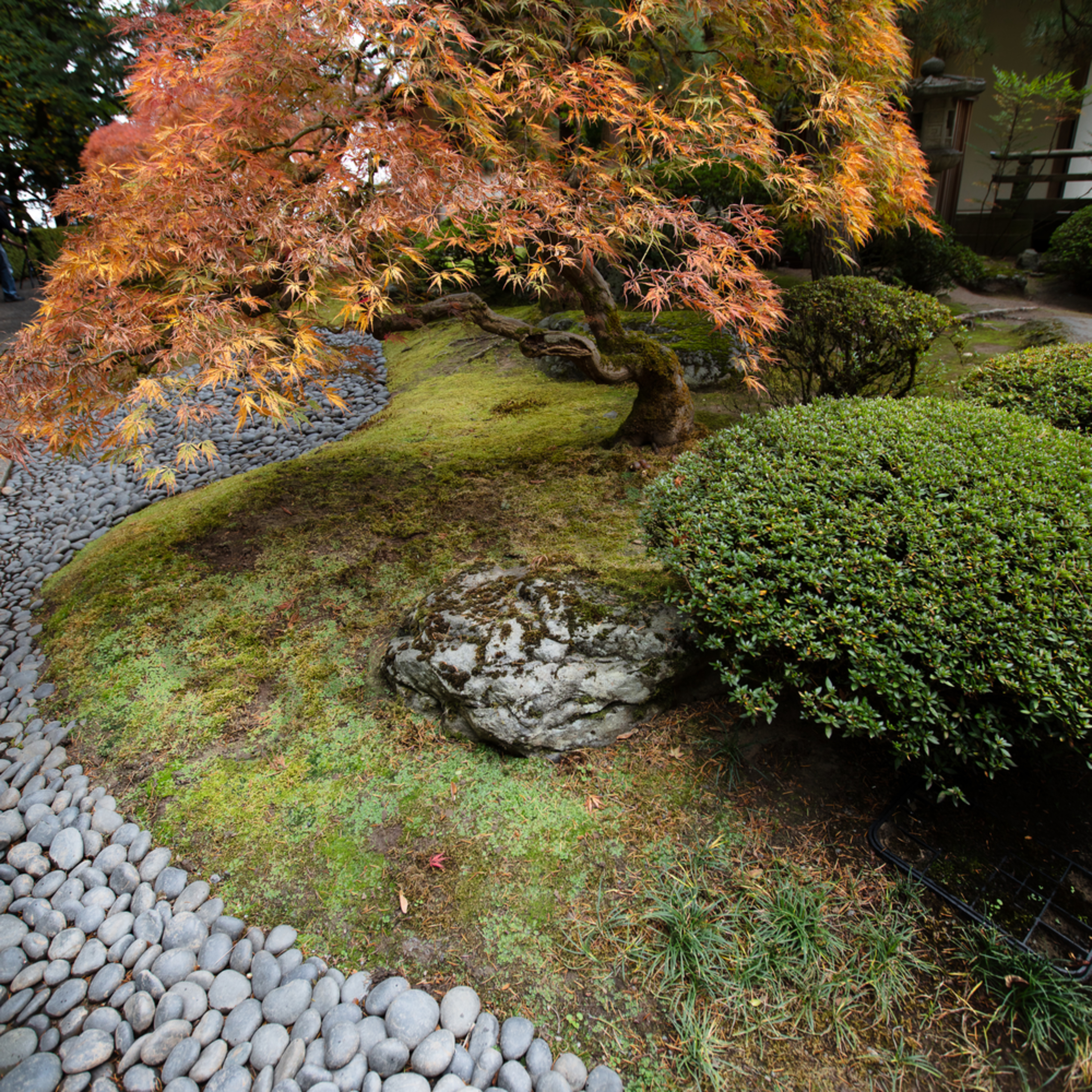Portland Japanese Gardens Rock River And Maple In Autumn Fine Art Photo By Barb Gonzalez Photography