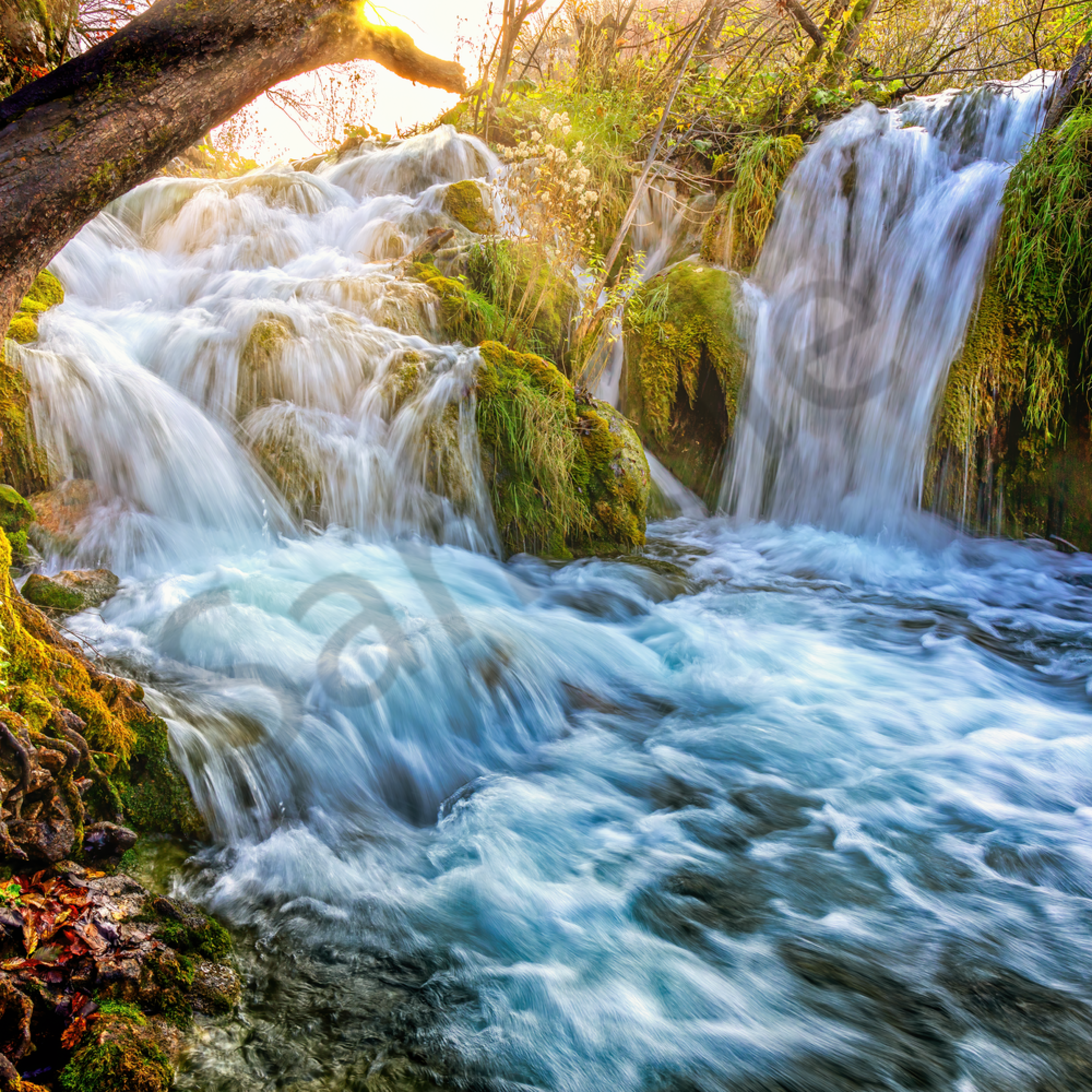 Plitvice double waterfall and tree i15ufs