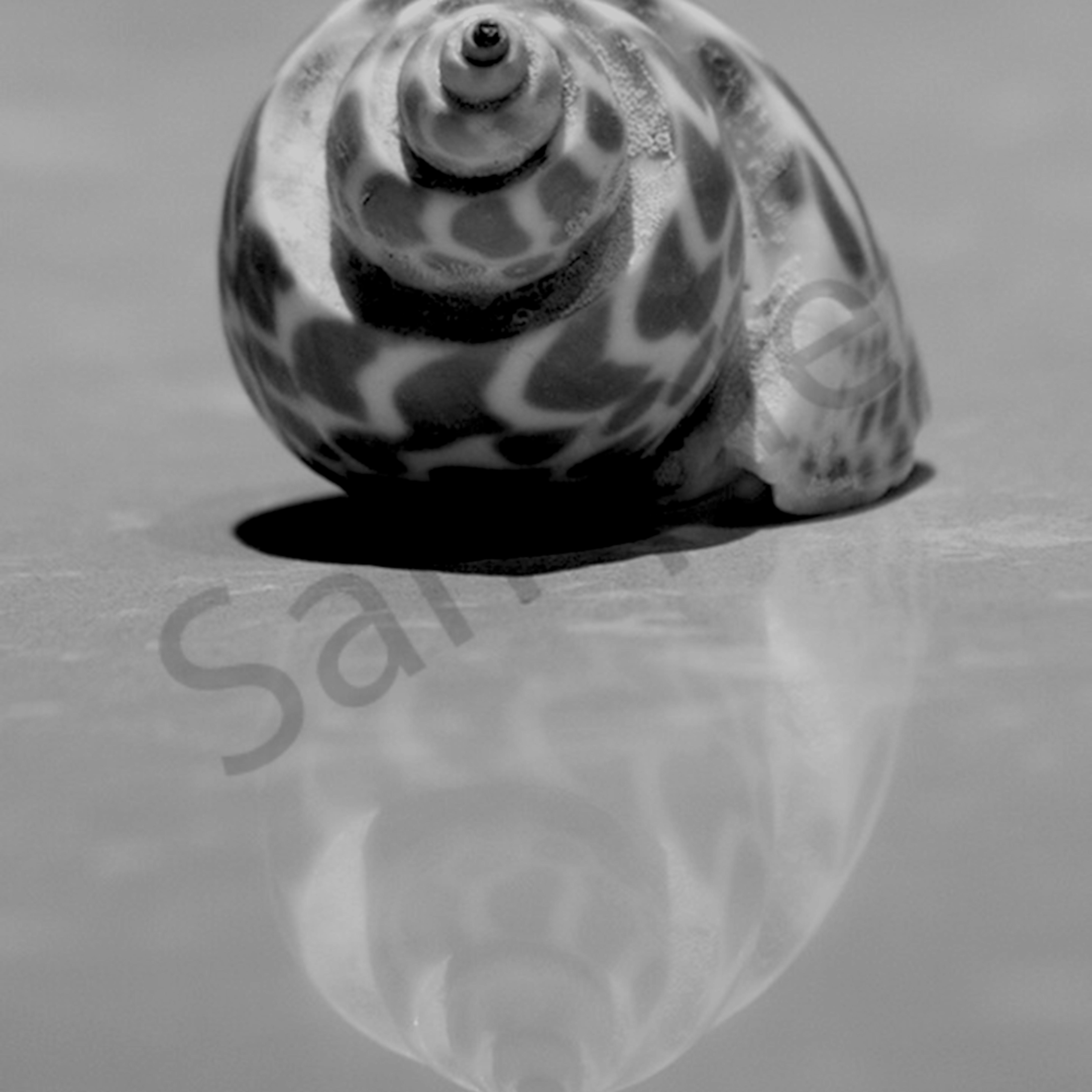 Shell larrain flntqz
