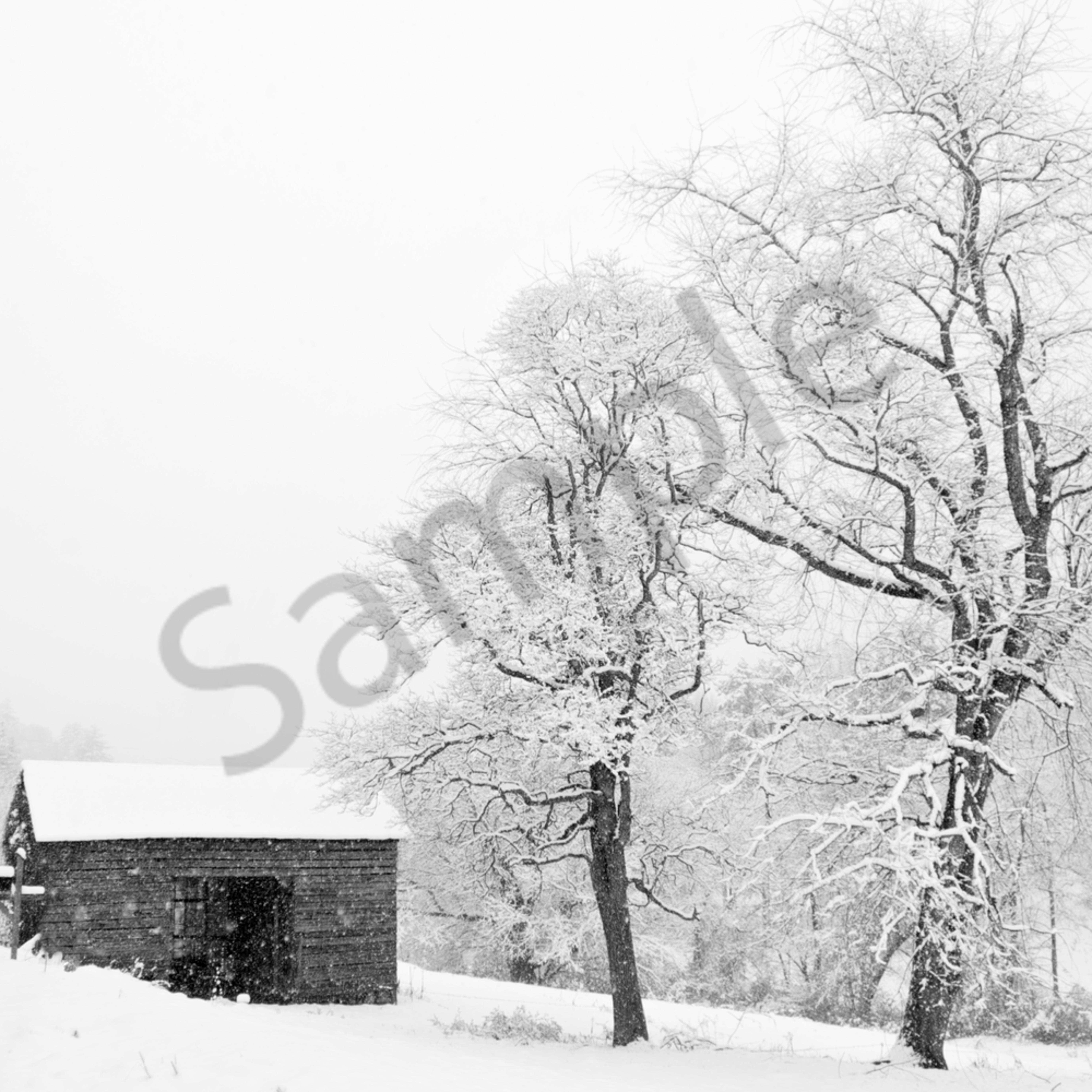 A wintery contrast ejvqfr