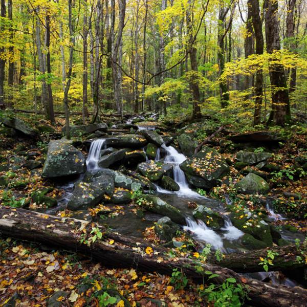 9964 69 fall stream kruv8k