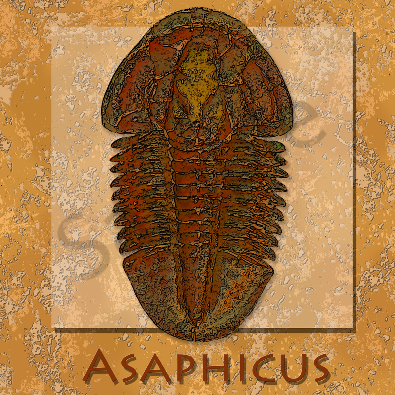 Asaphiscus2 wqbjjk