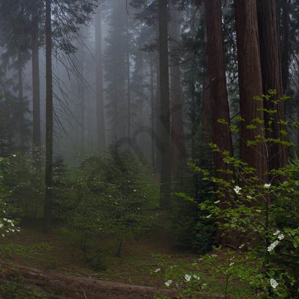Mysteryoftheforest f1ijuu