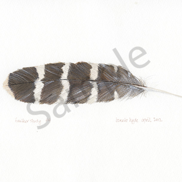Feather study 4 i234ff