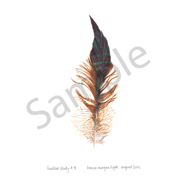 Feather study 9 pmhpzo