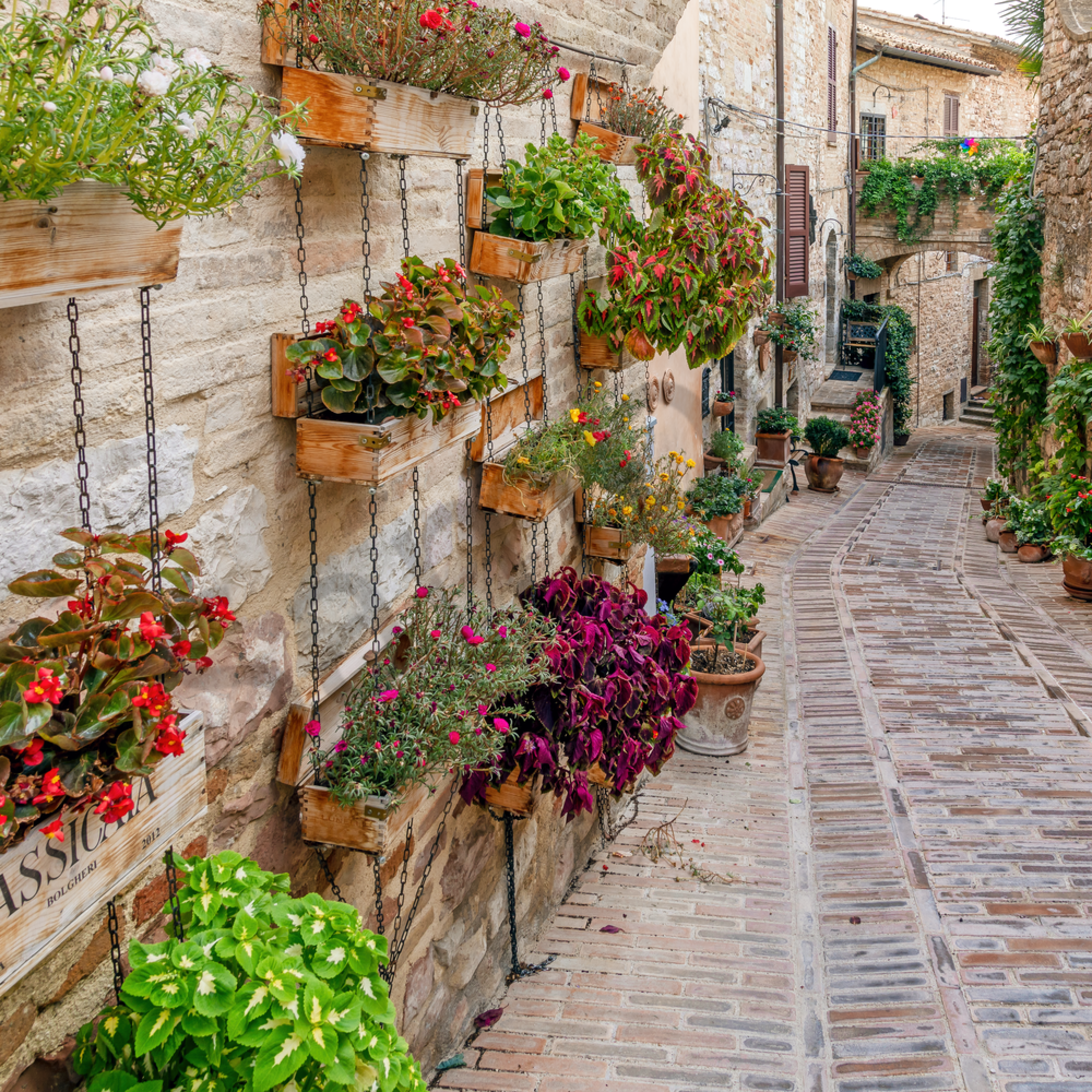 Wall flowers and street spello italy ithopw