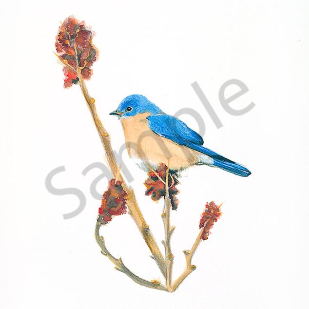 Bluebirds 2 ykcxgn